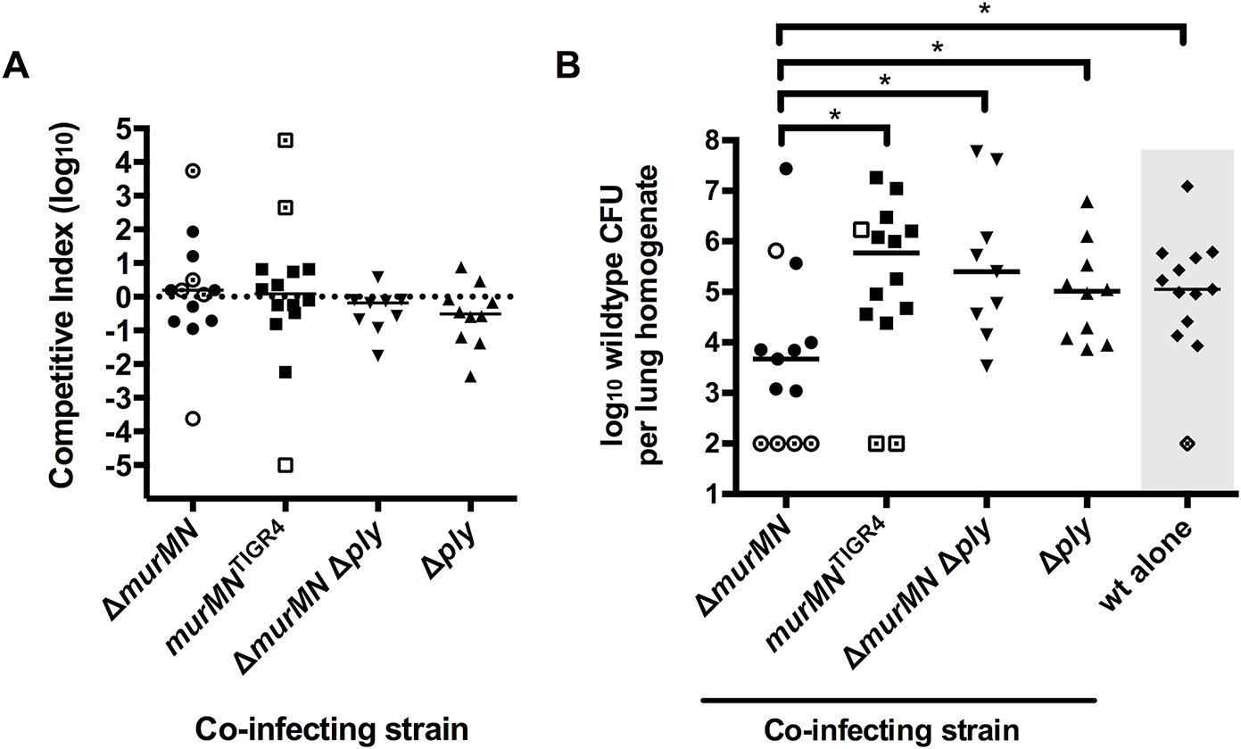 Co-infection with Δ<i>murMN</i> decreases wt burdens in a Ply-dependent manner.