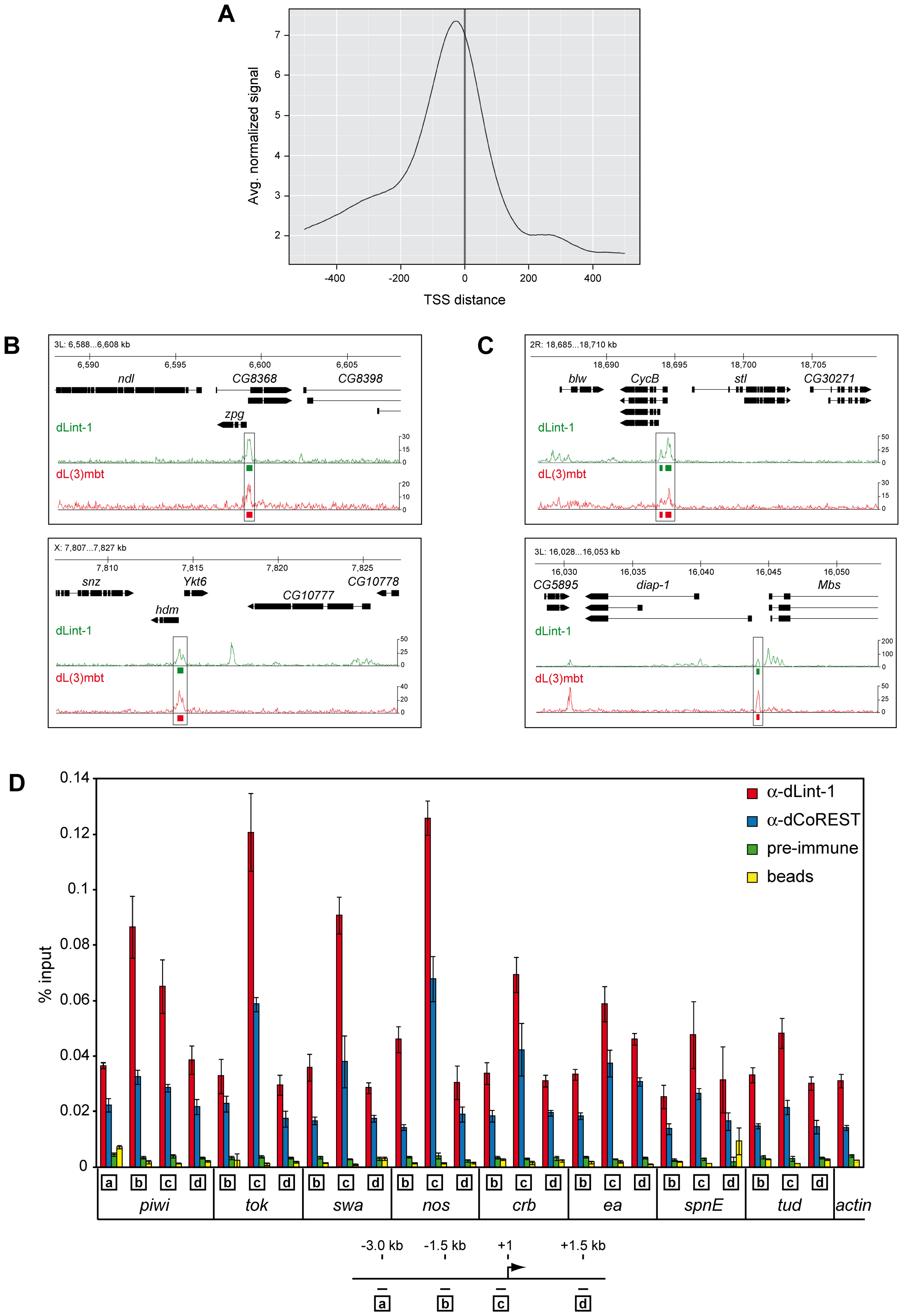 LINT binds to genes deregulated in <i>l(3)mbt<sup>ts</sup></i> brain tumours.