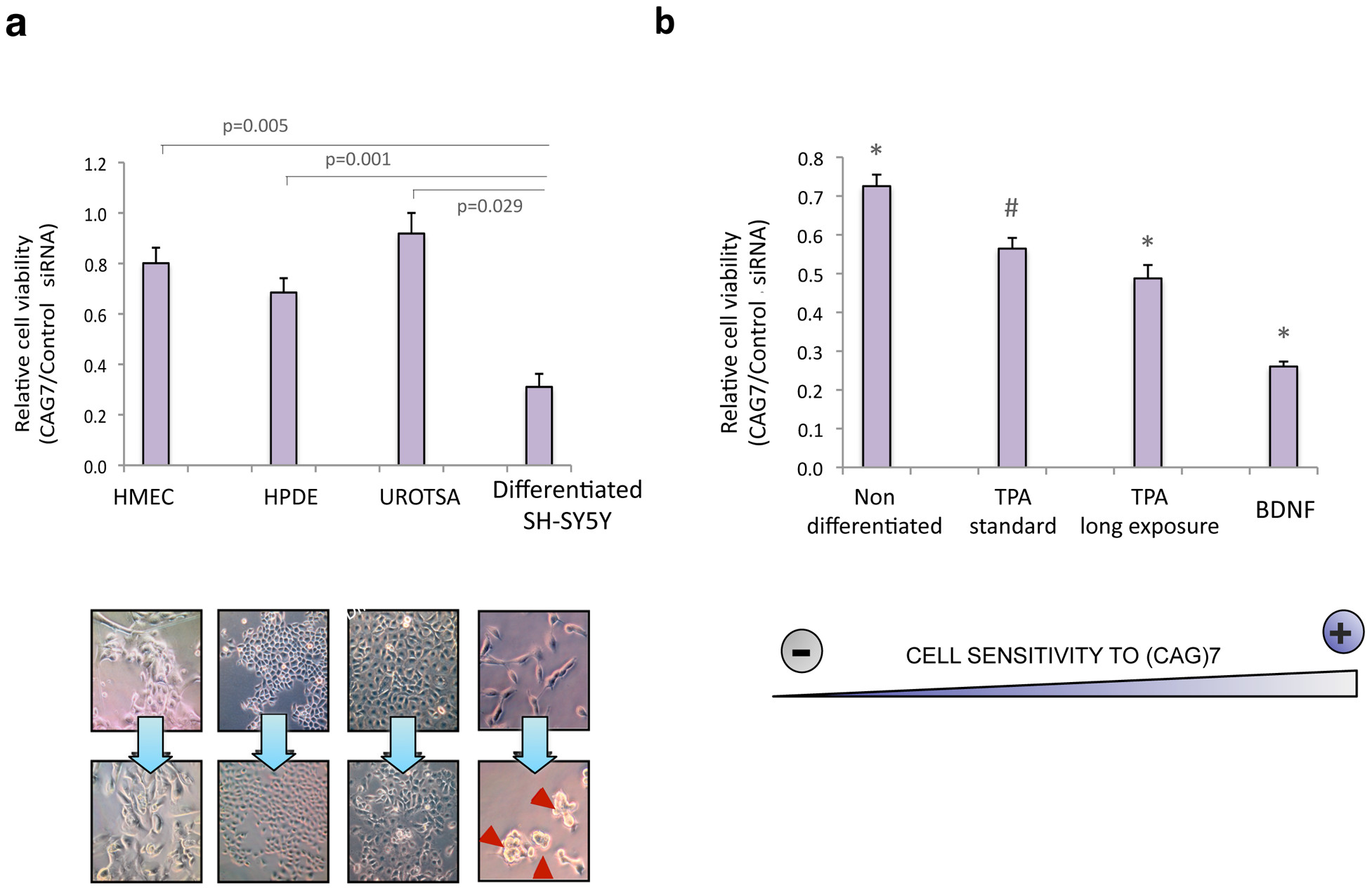 sCAG toxicity is variable in different human cells, preferentially affecting neuronal viability.