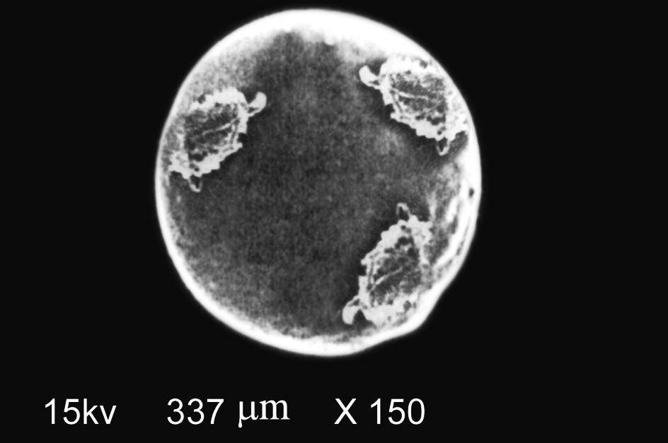 Fig. 4. SEM photograph of indomethacin microspheres
