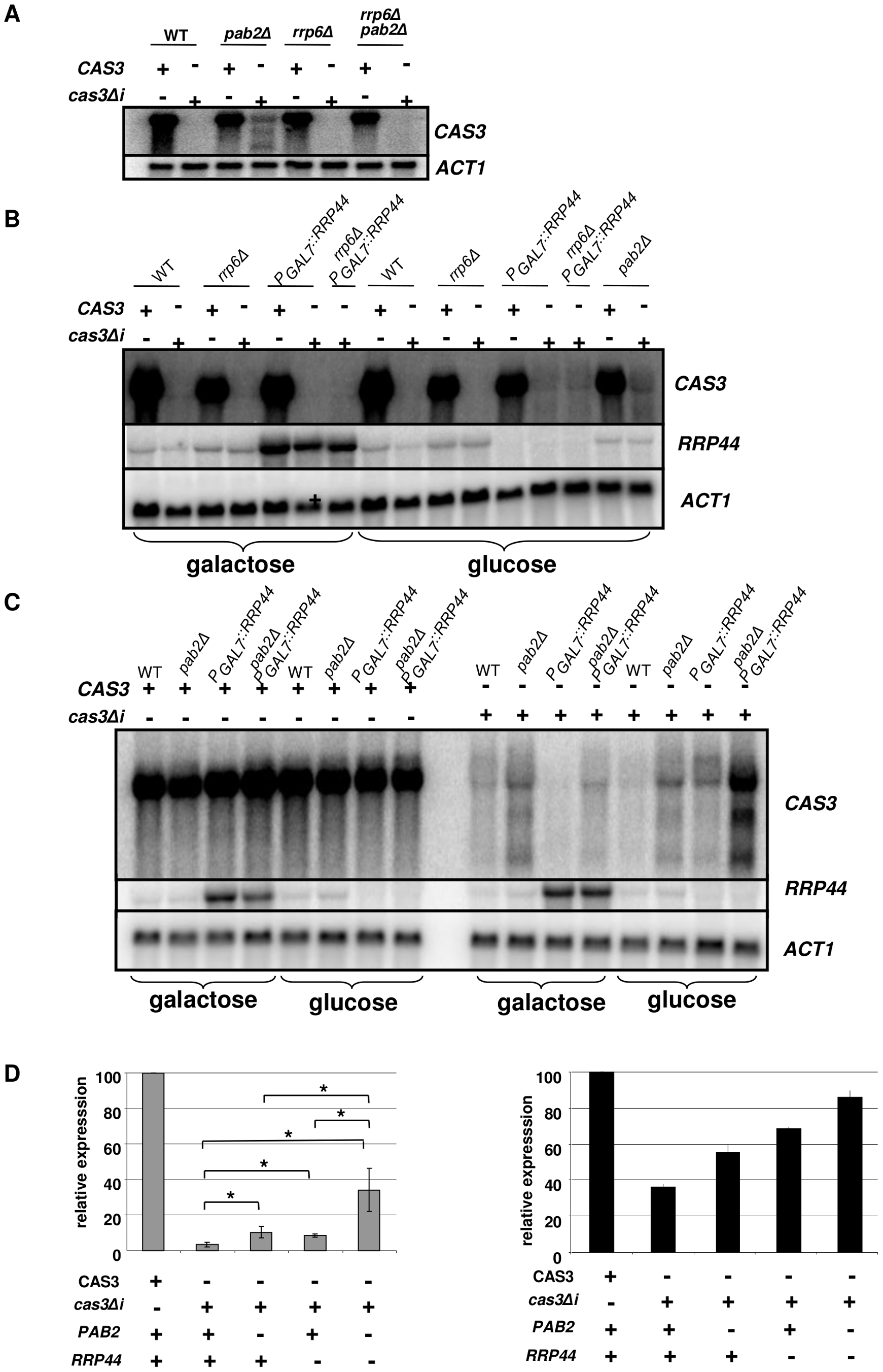 Regulation of <i>cas3Δi</i> mRNA accumulation by the exosome.