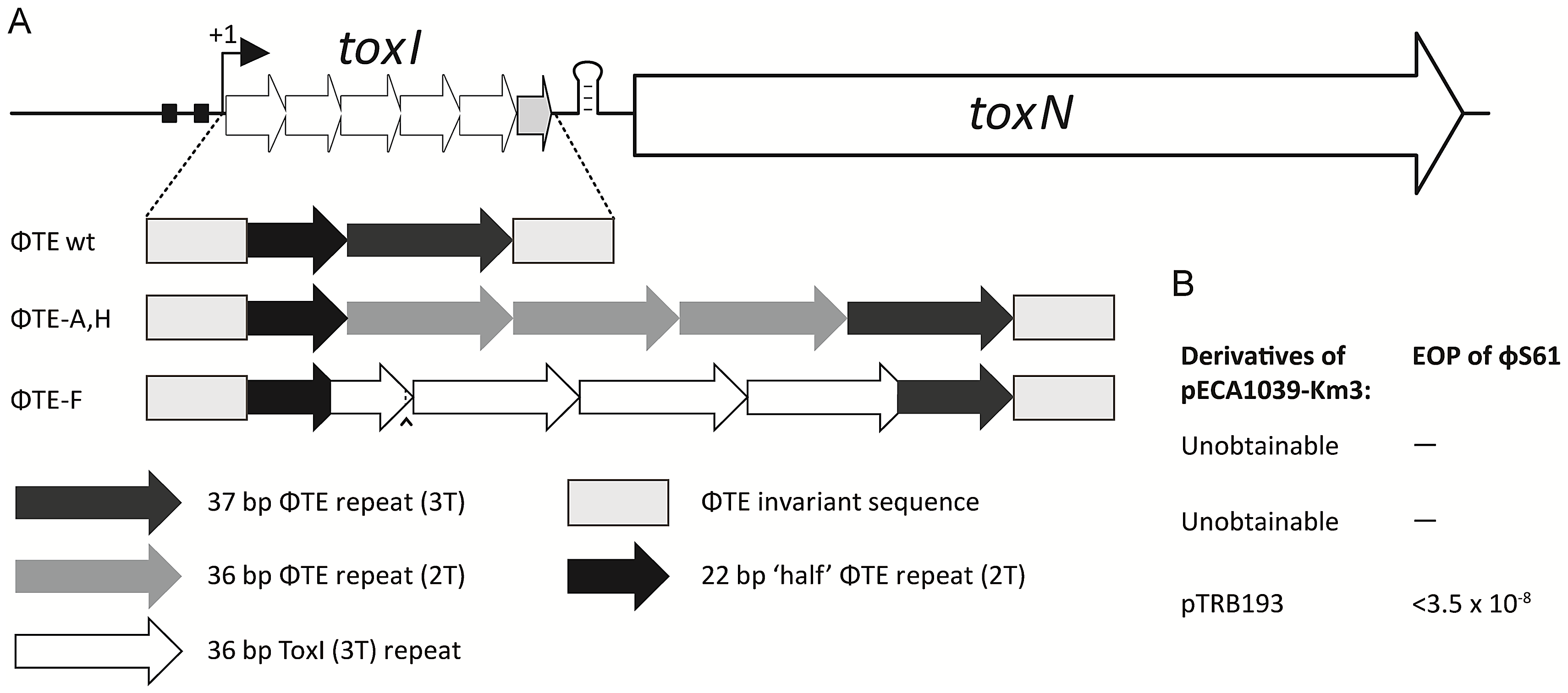 Only the recombinant ΦTE-F escape locus can replace ToxI in the native ToxIN locus.