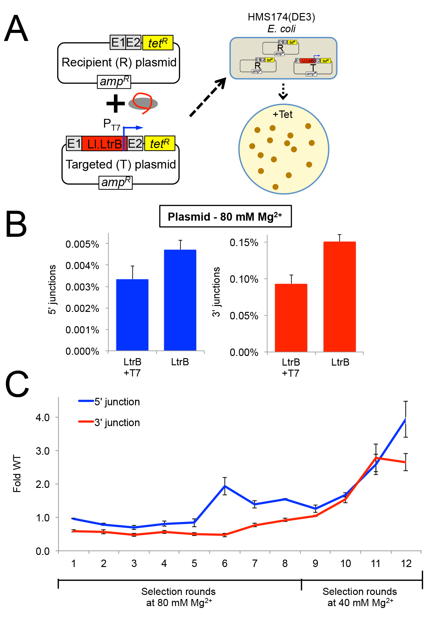 Selection of Ll.LtrB group II intron for retrohoming within HEK-293 cells at different MgCl<sub>2</sub> concentrations.