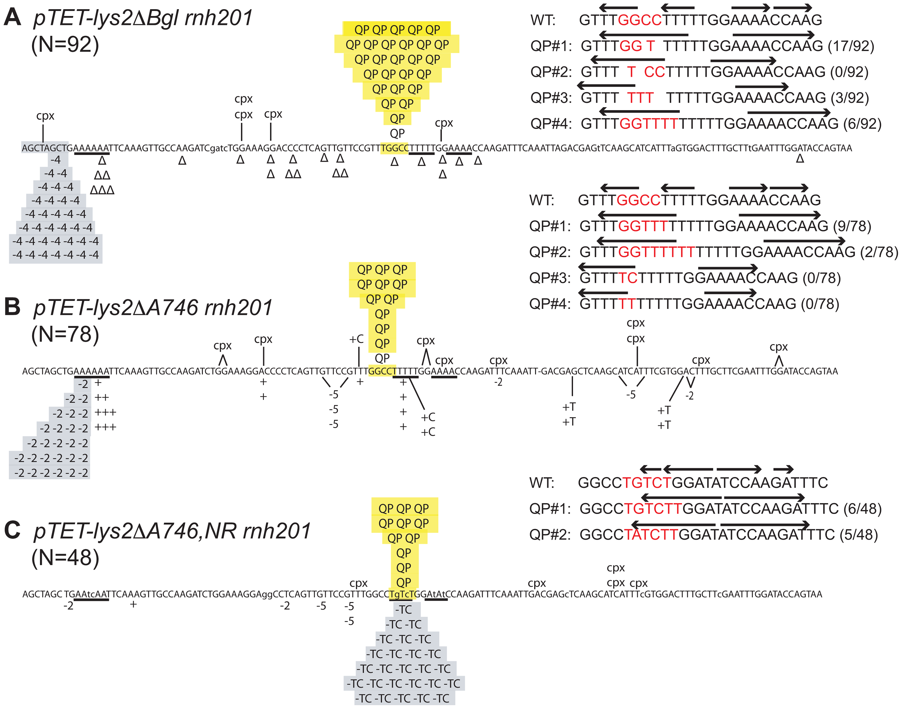 Reversion spectra in <i>rnh201Δ</i> backgrounds under high-transcription conditions.