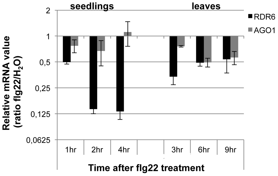 RDR6 and AGO1 mRNA levels rapidly decrease after flg22 treatment.