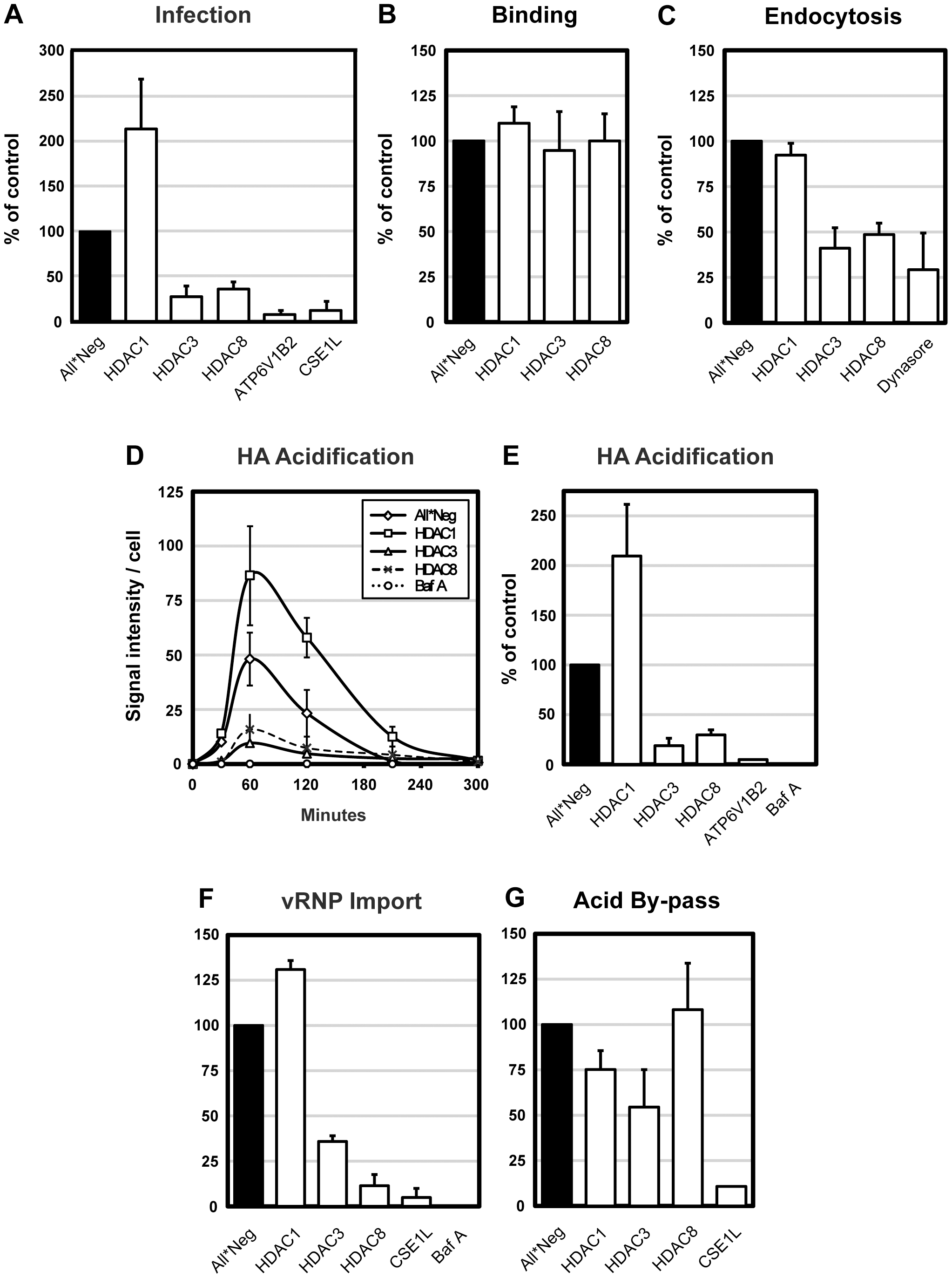 HDAC8 is required for IAV X31 infection, endocytosis and HA acidification.