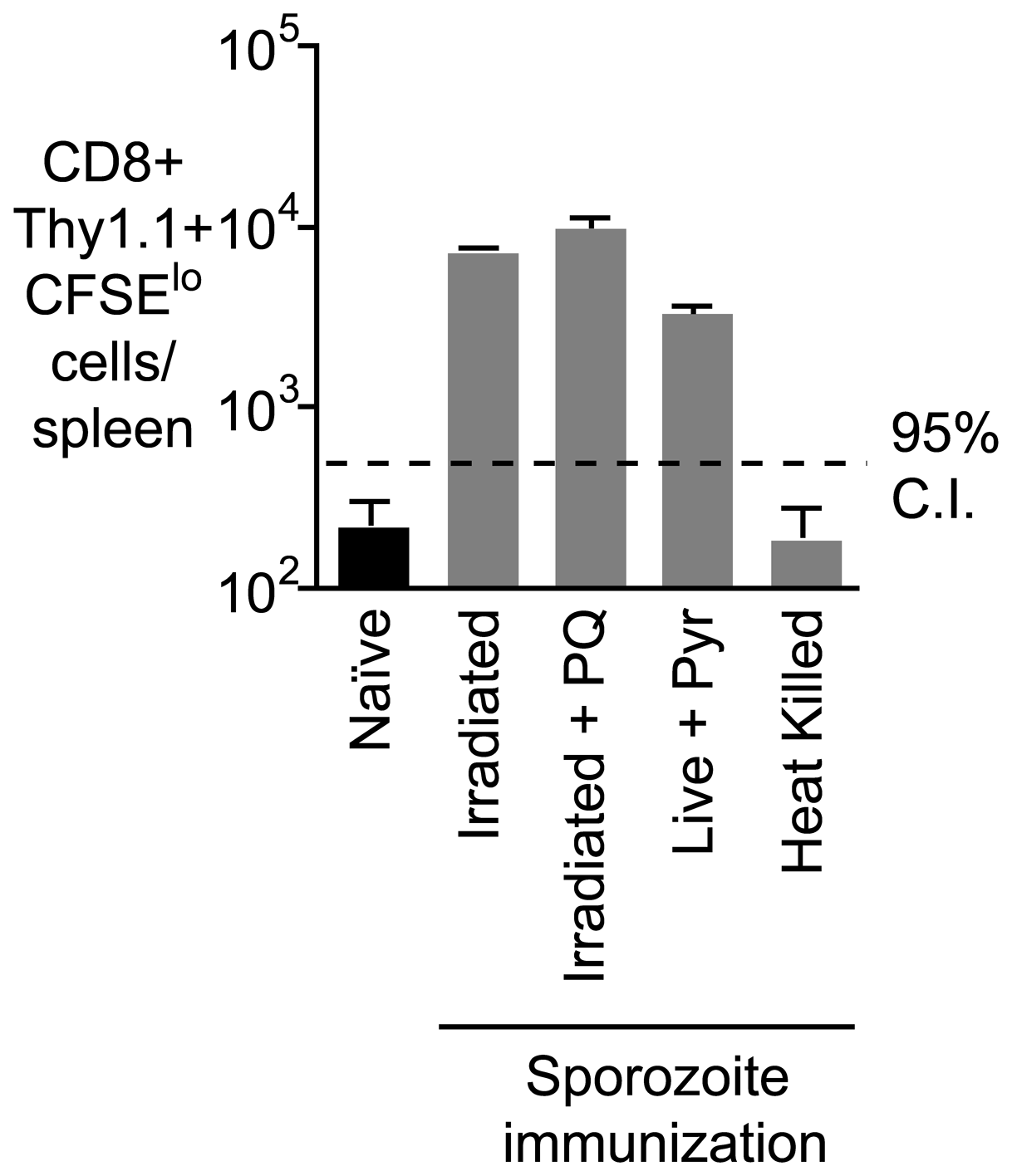 Prolonged antigen presentation does not depend on the presence of parasite.