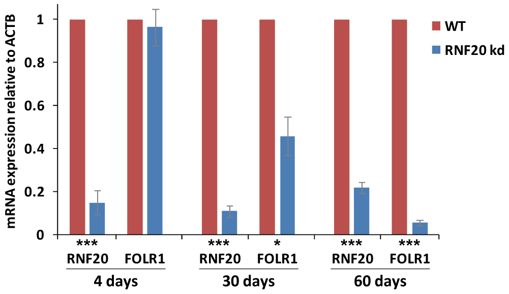 <i>FOLR1</i> expression is silenced following prolonged RNF20 depletion.