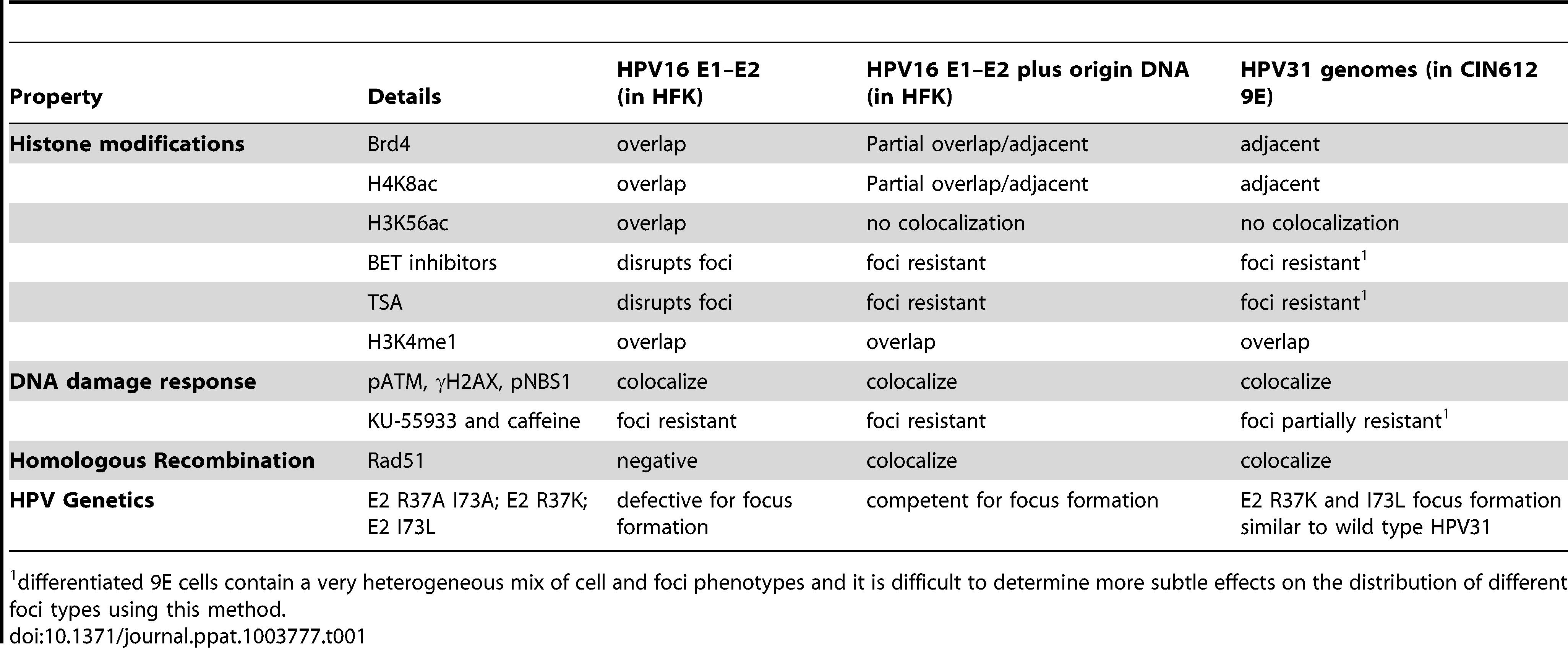 Properties of replication foci.
