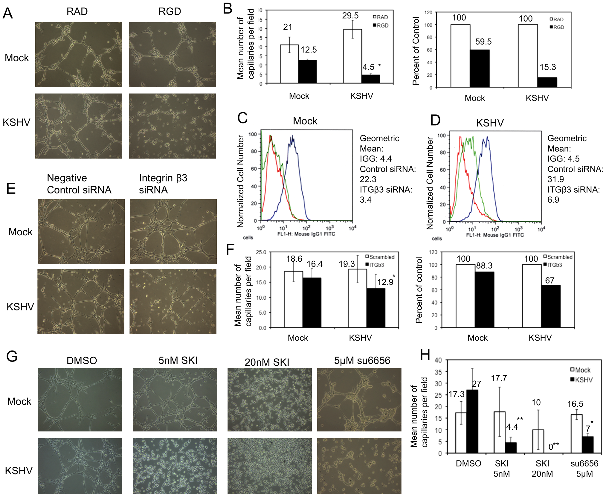 Capillary morphogenesis of KSHV-infected cells requires αVβ3 integrin.