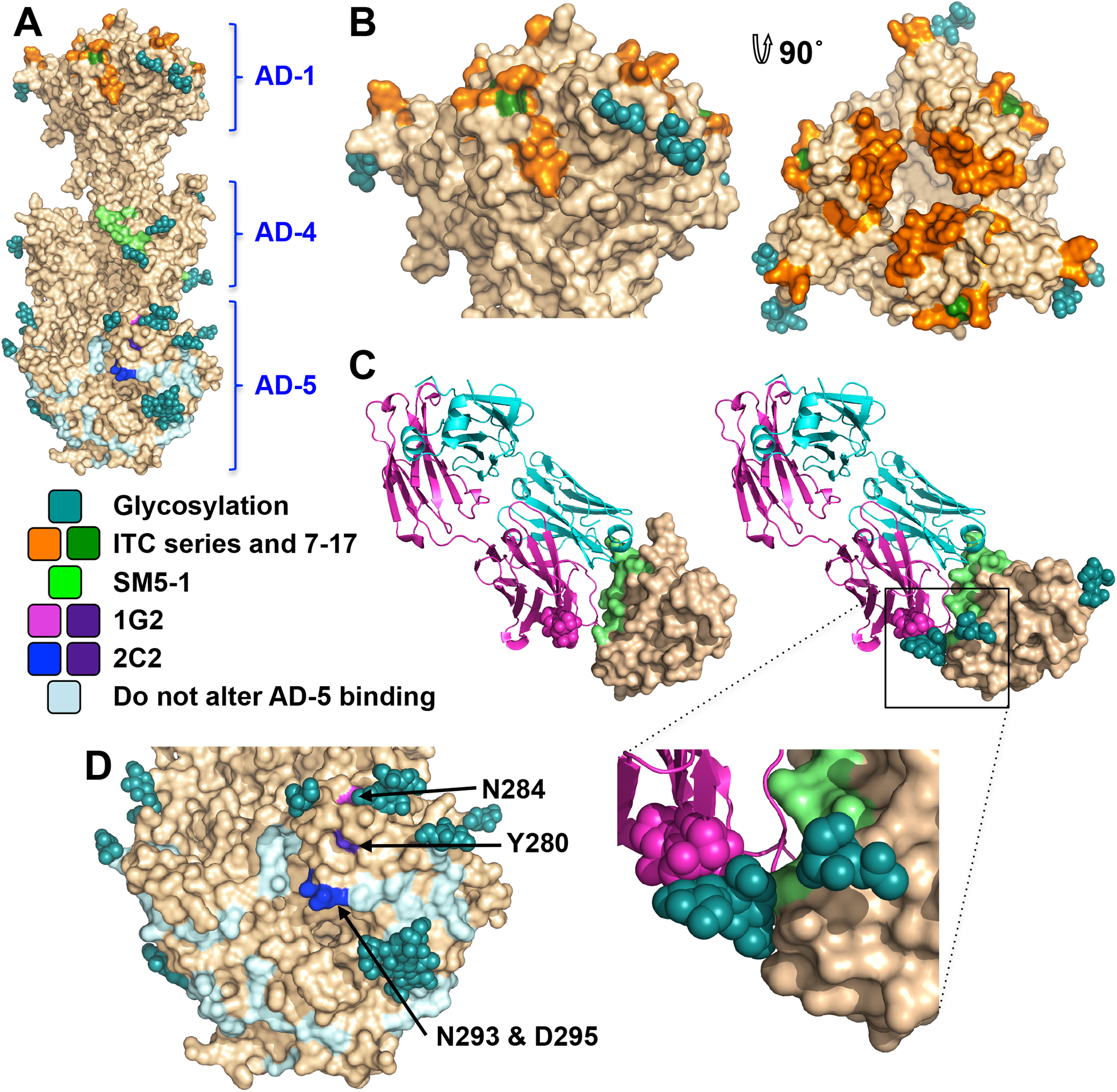 Neutralizing antibody epitopes.