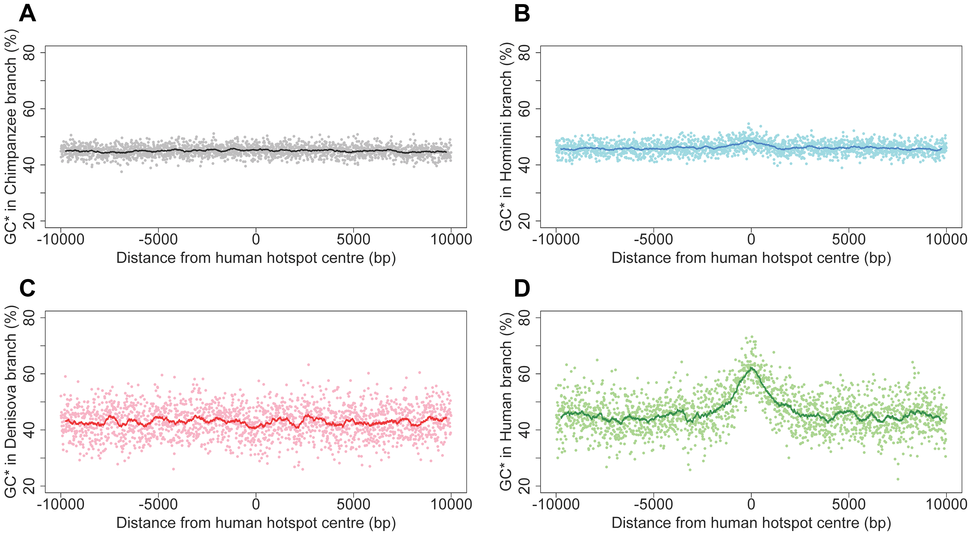 Equilibrium GC-content (GC*) around human recombination hotspots in different branches of the phylogeny.