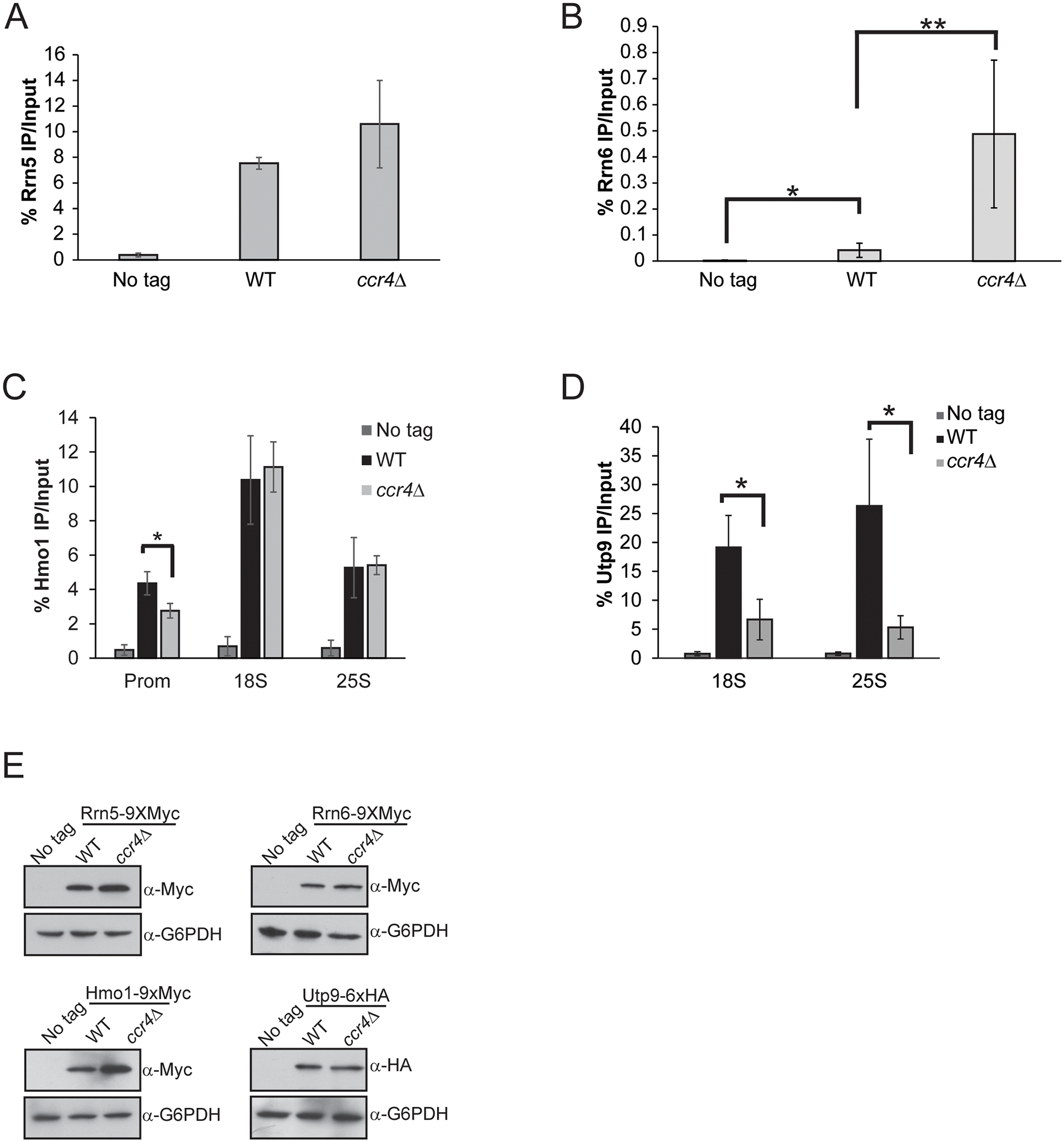 Ccr4-Not has selective effects on Pol I transcriptional regulators.