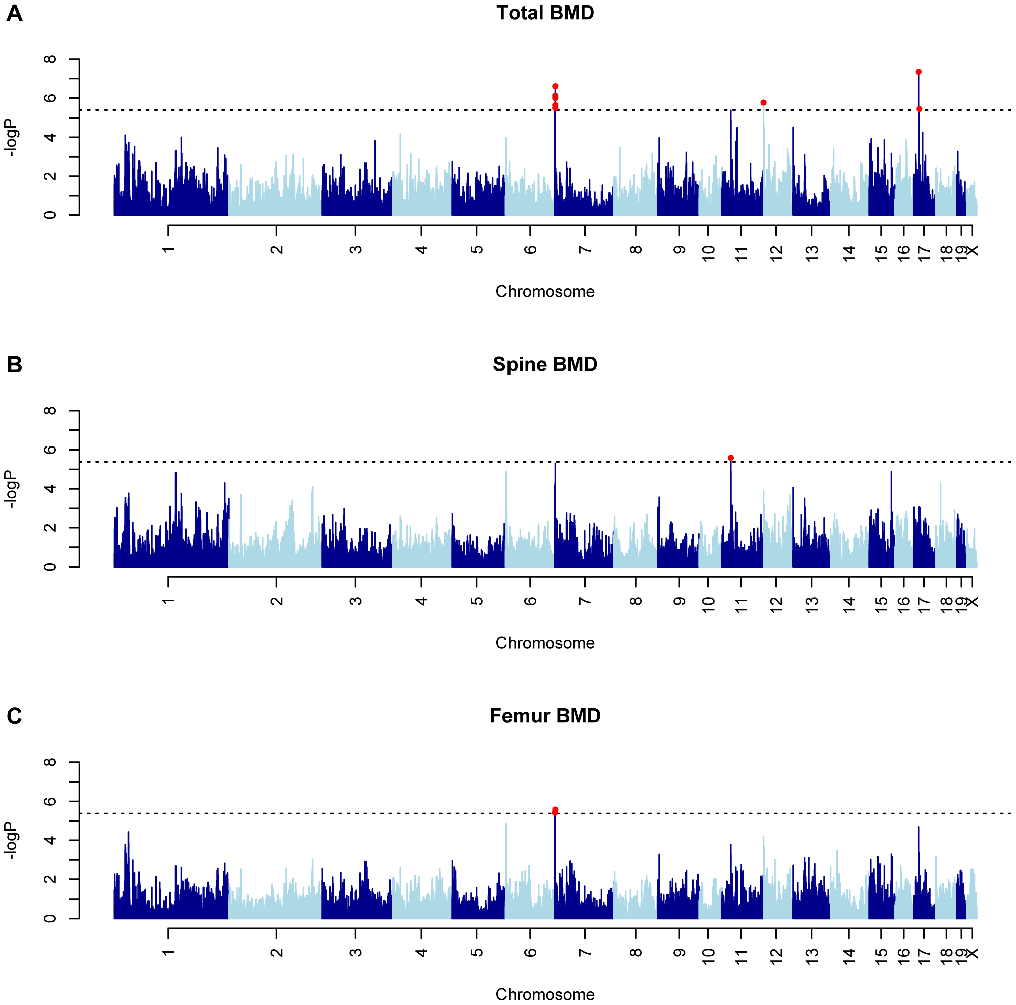 GWAS results for BMD in the HMDP.