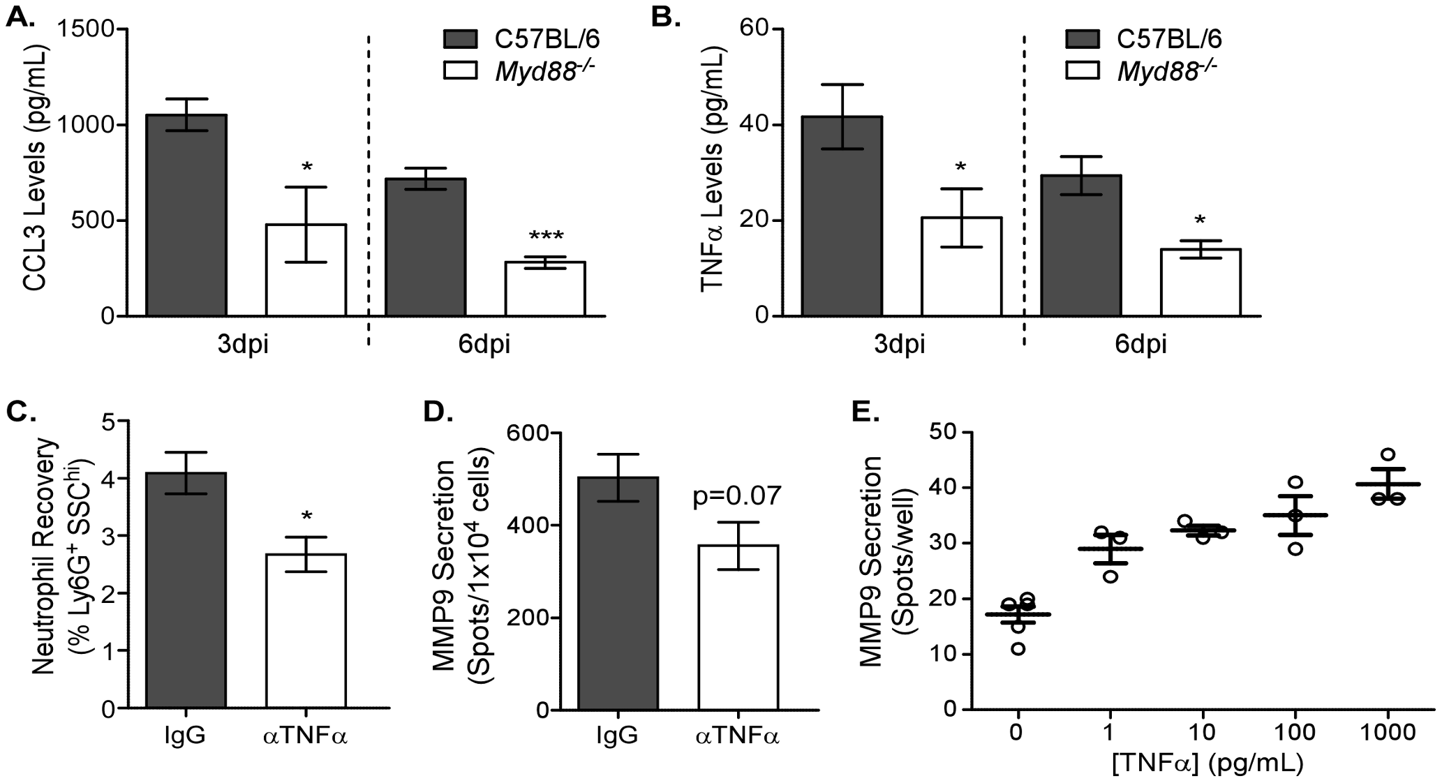 MyD88-dependent TNFα expression induces MMP9 in neutrophils.