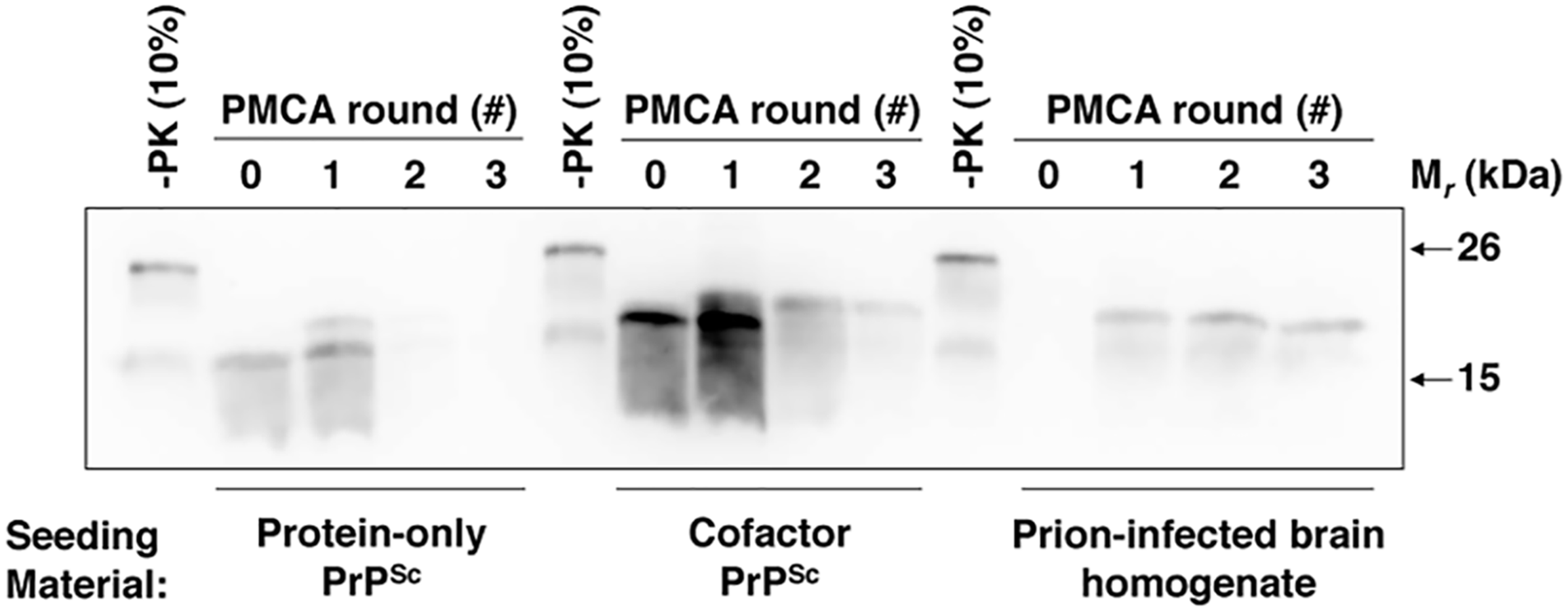 Cofactor and protein-only PrP<sup>Sc</sup> differ in their ability to template the conversion of PrP substrates containing a GPI anchor.