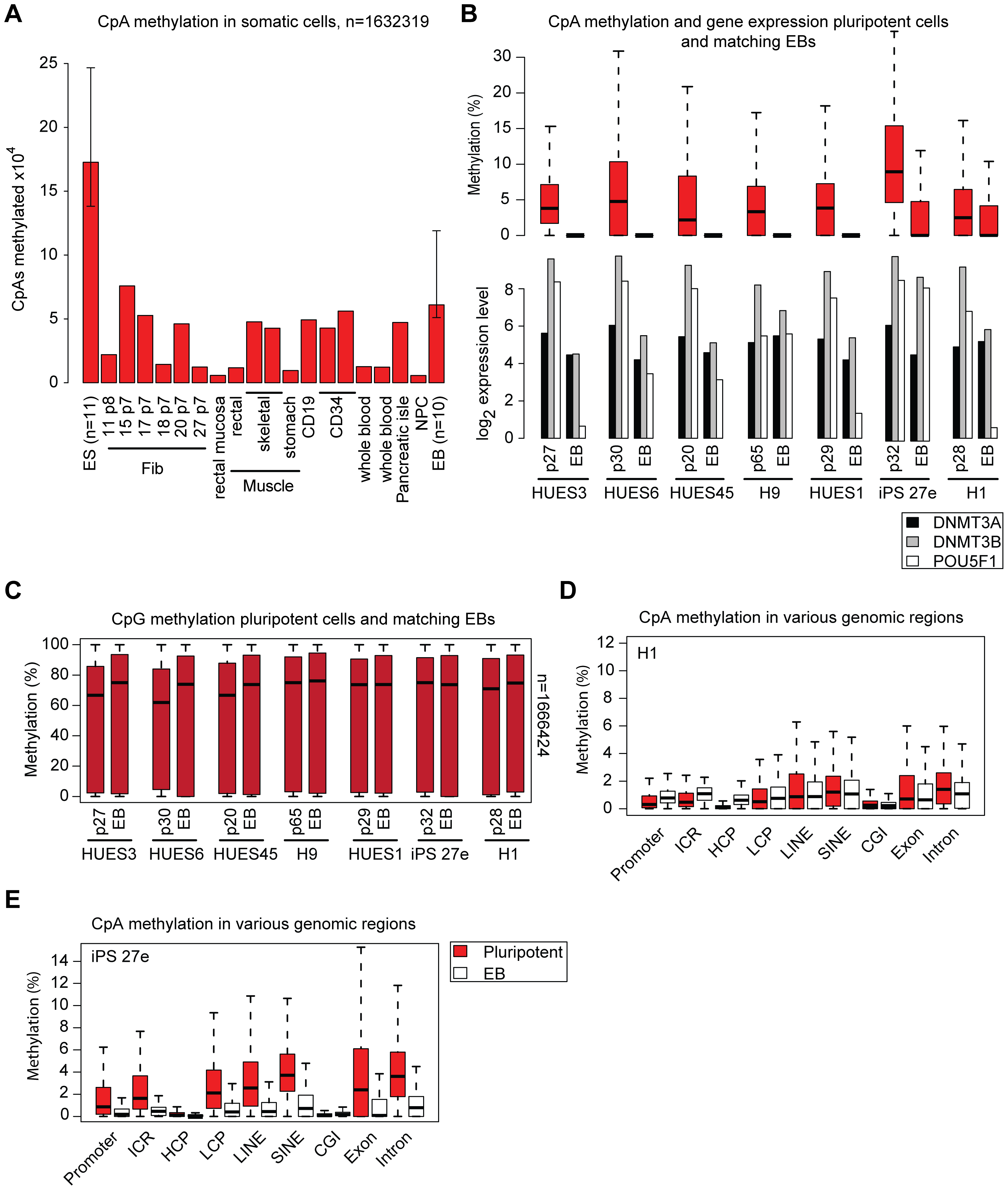 CpA methylation dynamics are closely linked to DNMT3 gene expression levels.