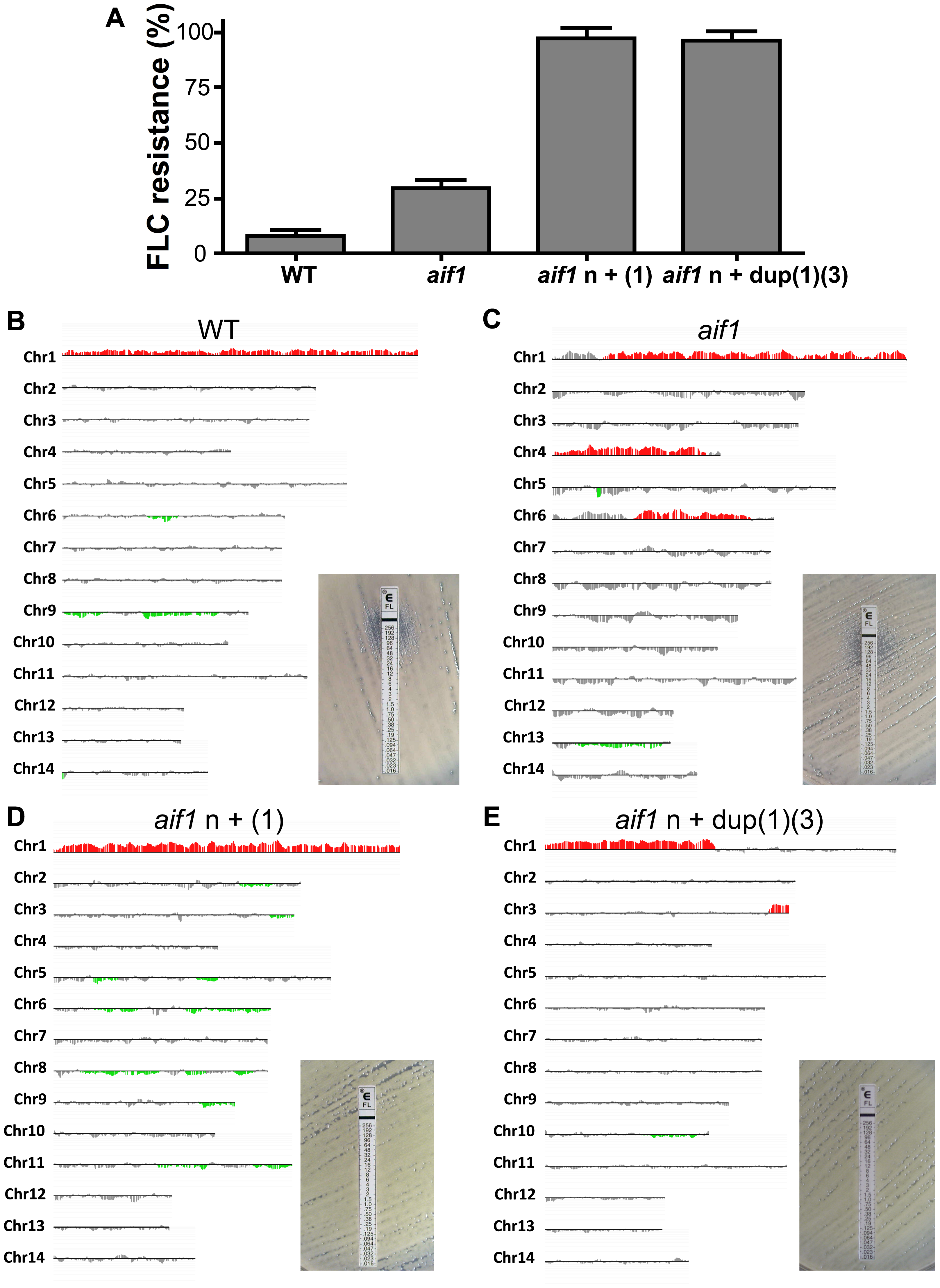 Strains recovered from treated mice are fluconazole resistant and aneuploid. A