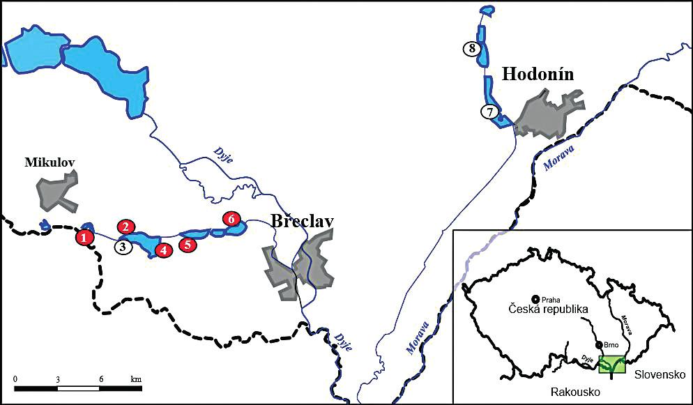 Studijní plochy odchytu komárů v roce 2015 a 2016 s vyznačením lokalit se záchytem WNV (červeně) Vysvětlivky: 1−'Nový', 2−'Nesyt-pozorovatelna 1', 3−'Nesyt-Včelínek', 4−'Nesyt-pozorovatelna 2', 5−'Hlohovecký', 6−'Mlýnský', 7−'Hodonín', 8−'Mutěnice'. Figure 1. Mosquito collections (2015, 2016). WNV positive study sites are highlighted in red colour Legend: 1−'Nový', 2−'Nesyt-pozorovatelna 1', 3−'Nesyt-Včelínek', 4−'Nesyt-pozorovatelna 2', 5−'Hlohovecký', 6−'Mlýnský', 7−'Hodonín', 8−'Mutěnice'.