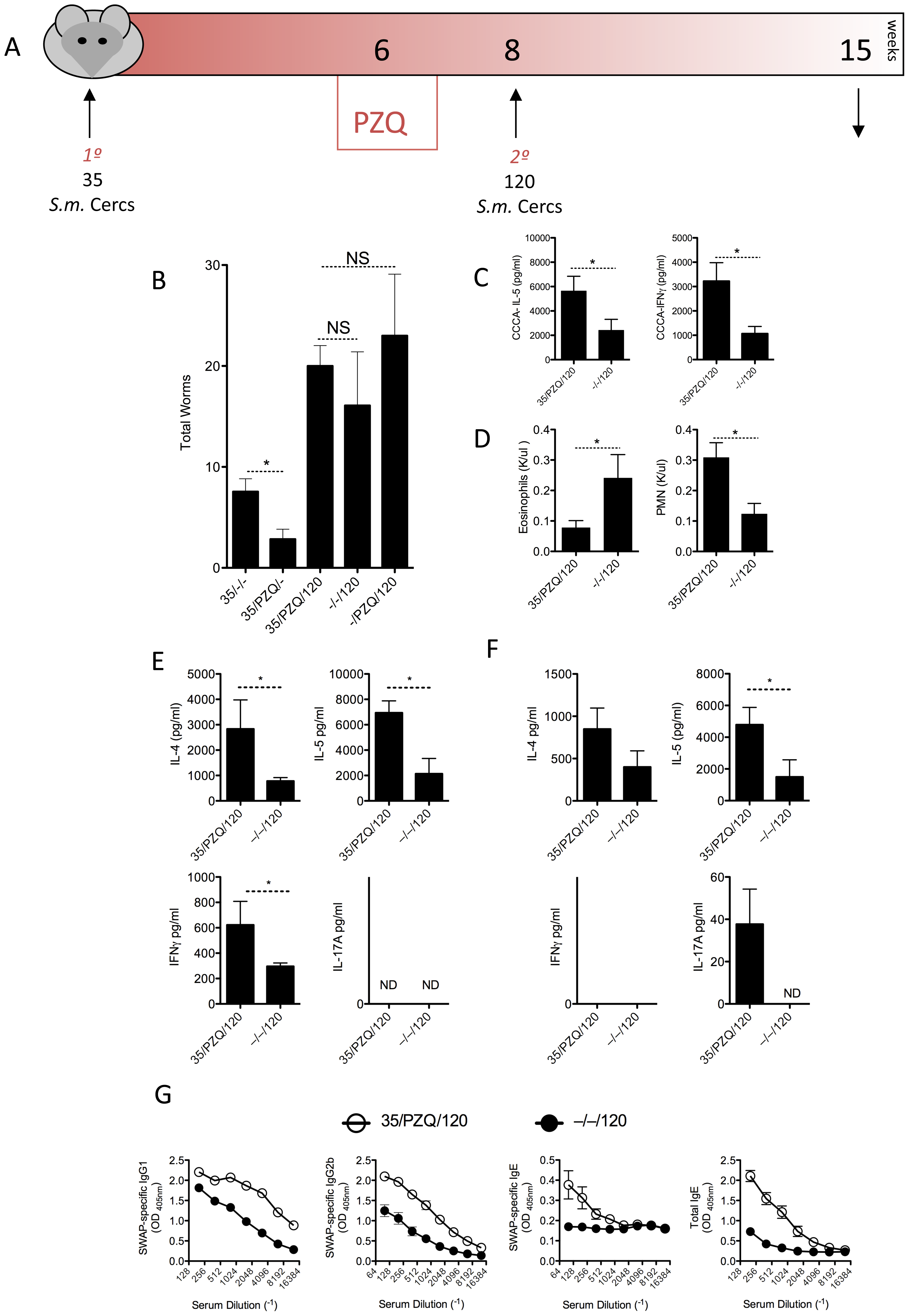 Comparable susceptibility to re-infection despite elevated anti-worm responses in PZQ-treated mice.
