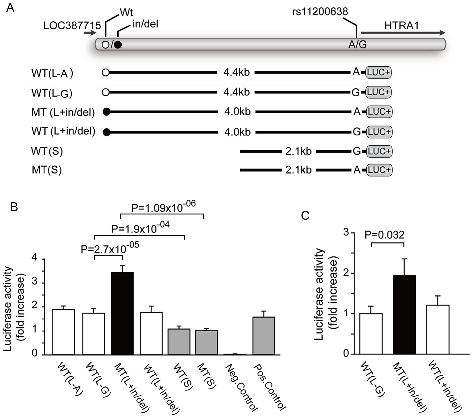 Heterologous Luciferase assays <i>in vitro</i> and <i>in vivo</i>.