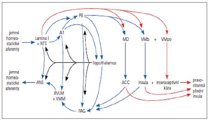 Homeostatický systém, zdroje interocepce a emočního pozadí (8).