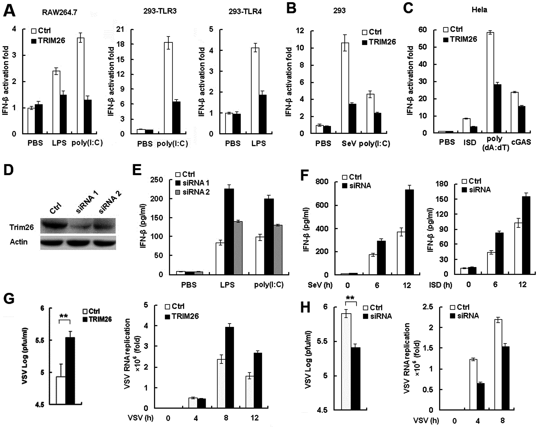 TRIM26 negatively regulates IFN-β production and antiviral response.