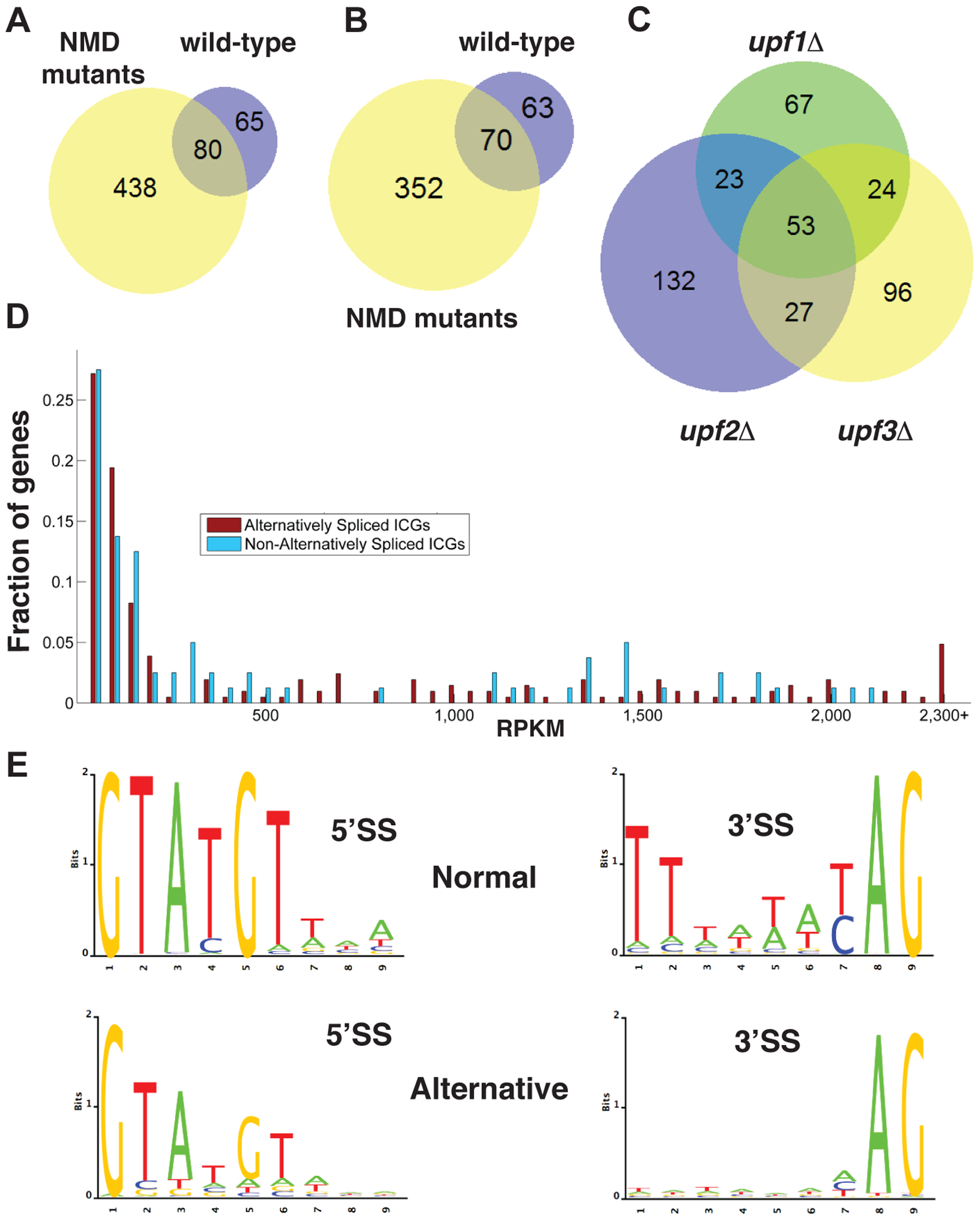 Bioinformatics analysis of alternative splice site usage in wild-type and NMD mutants.