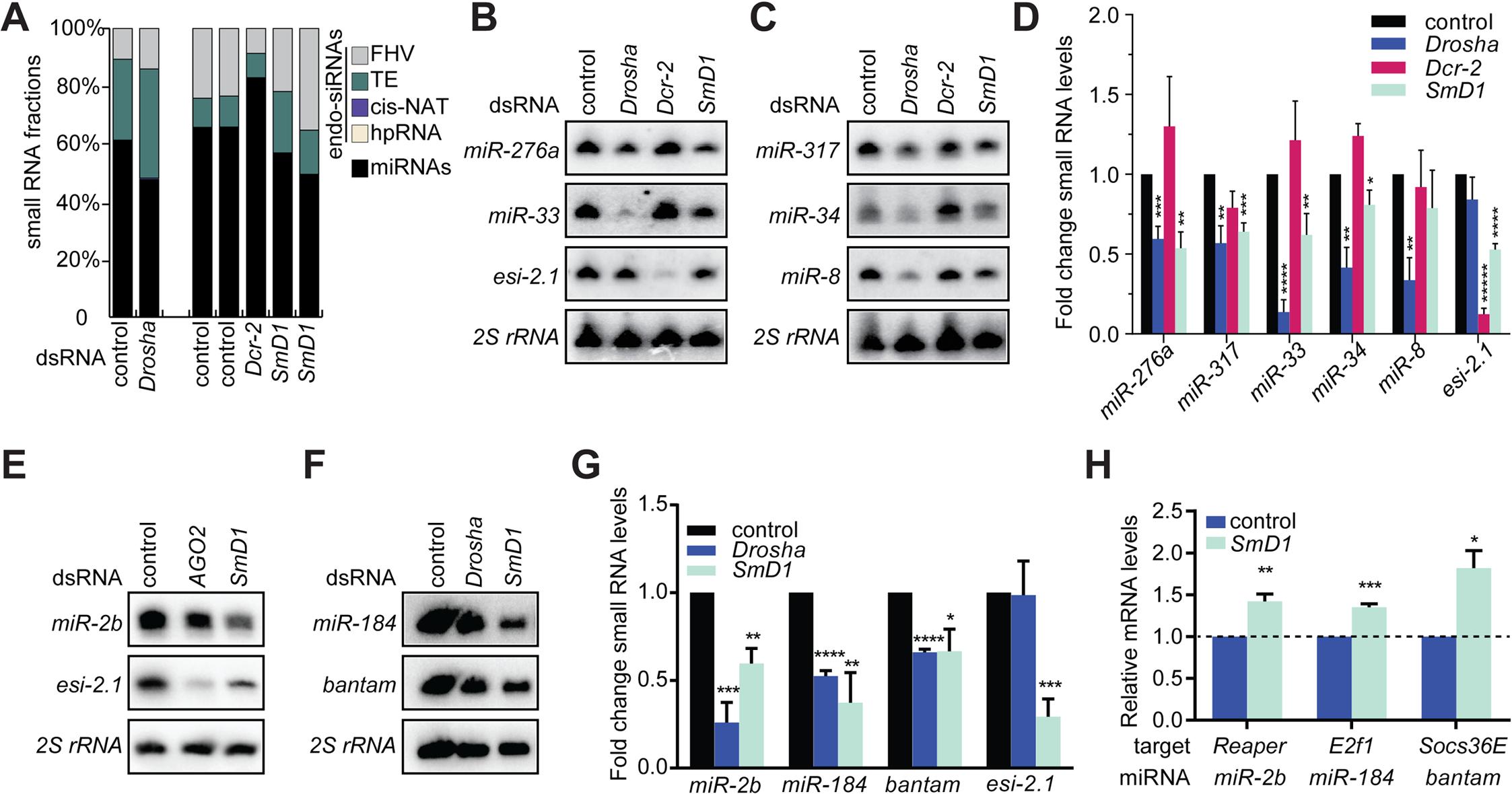 Loss of SmD1 compromises miRNA biogenesis.