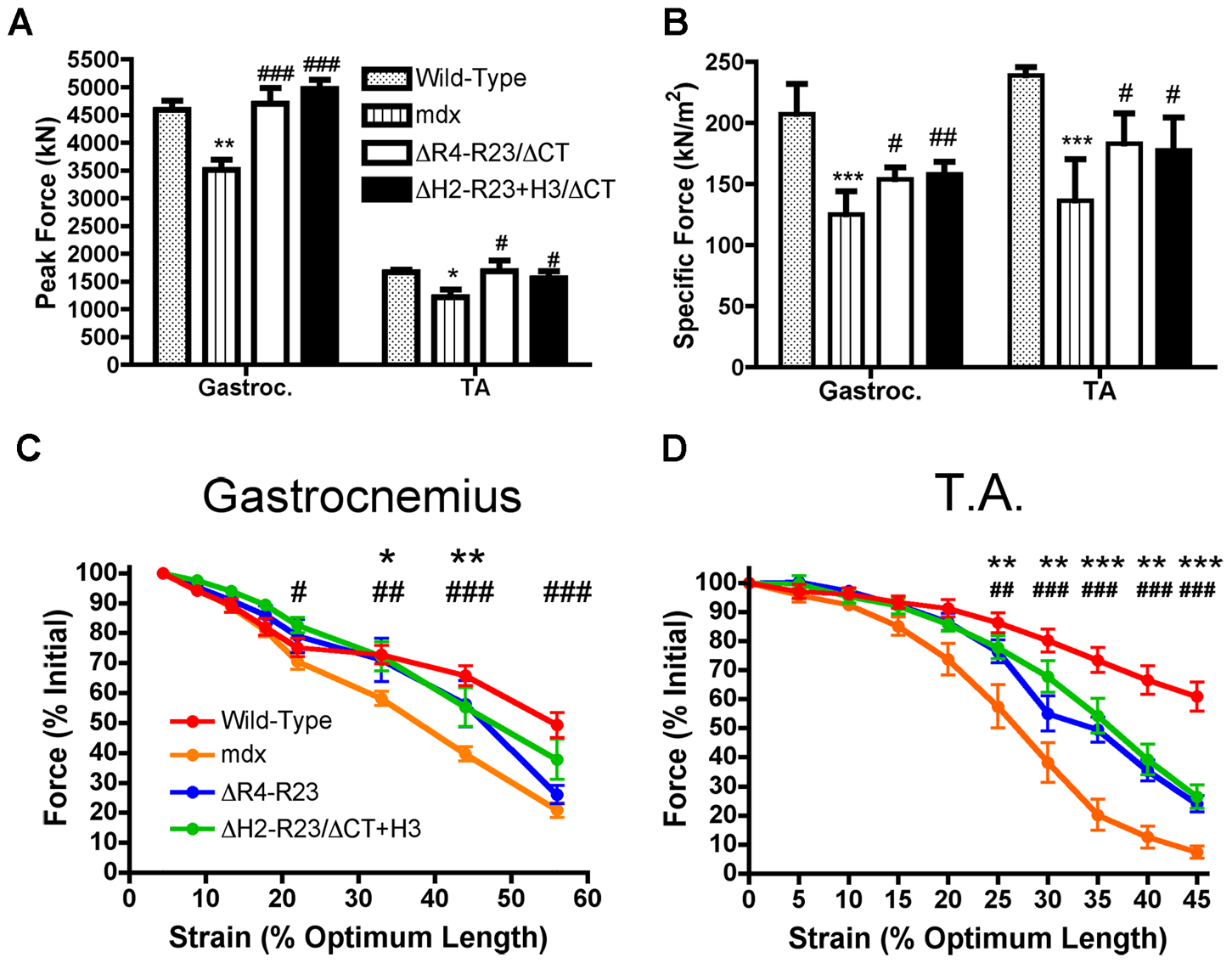 Microdystrophins significantly improve the mechanical properties of <i>mdx</i> hind limb muscles.