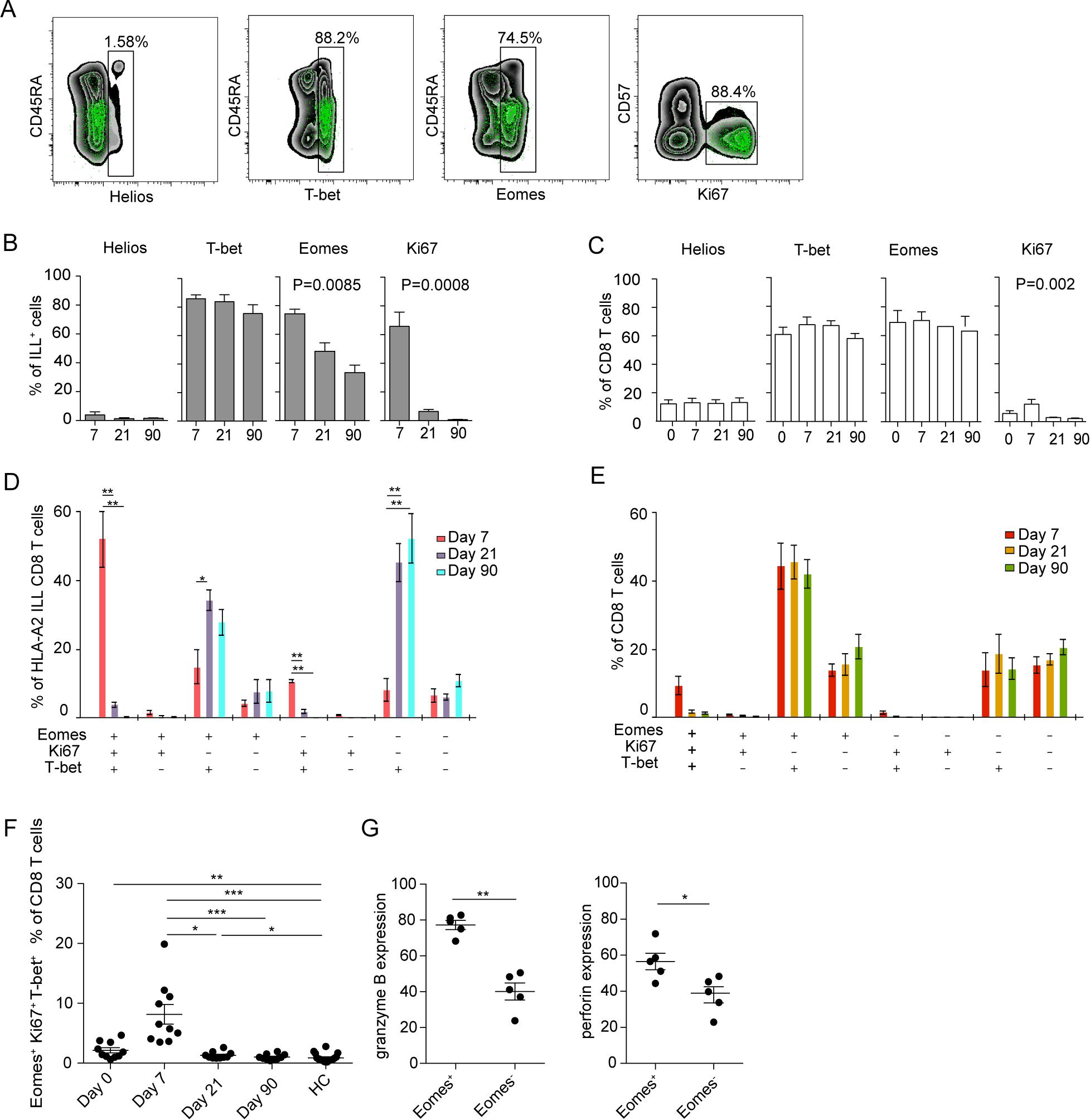 Transcription factor profile of TBEV-specific cells.