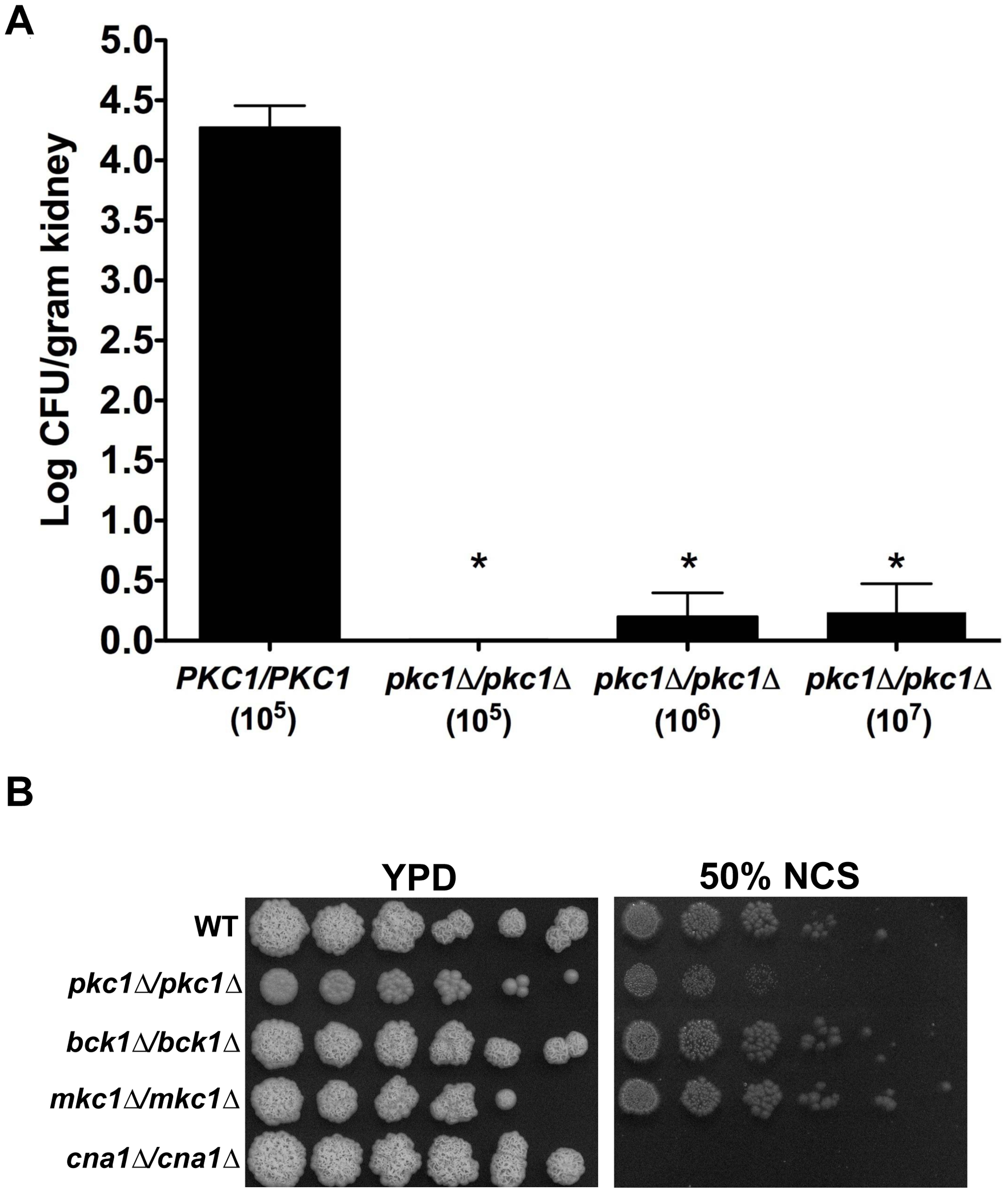 Deletion of <i>C. albicans PKC1</i> attenuates virulence in a murine model by targets distinct from calcineurin.