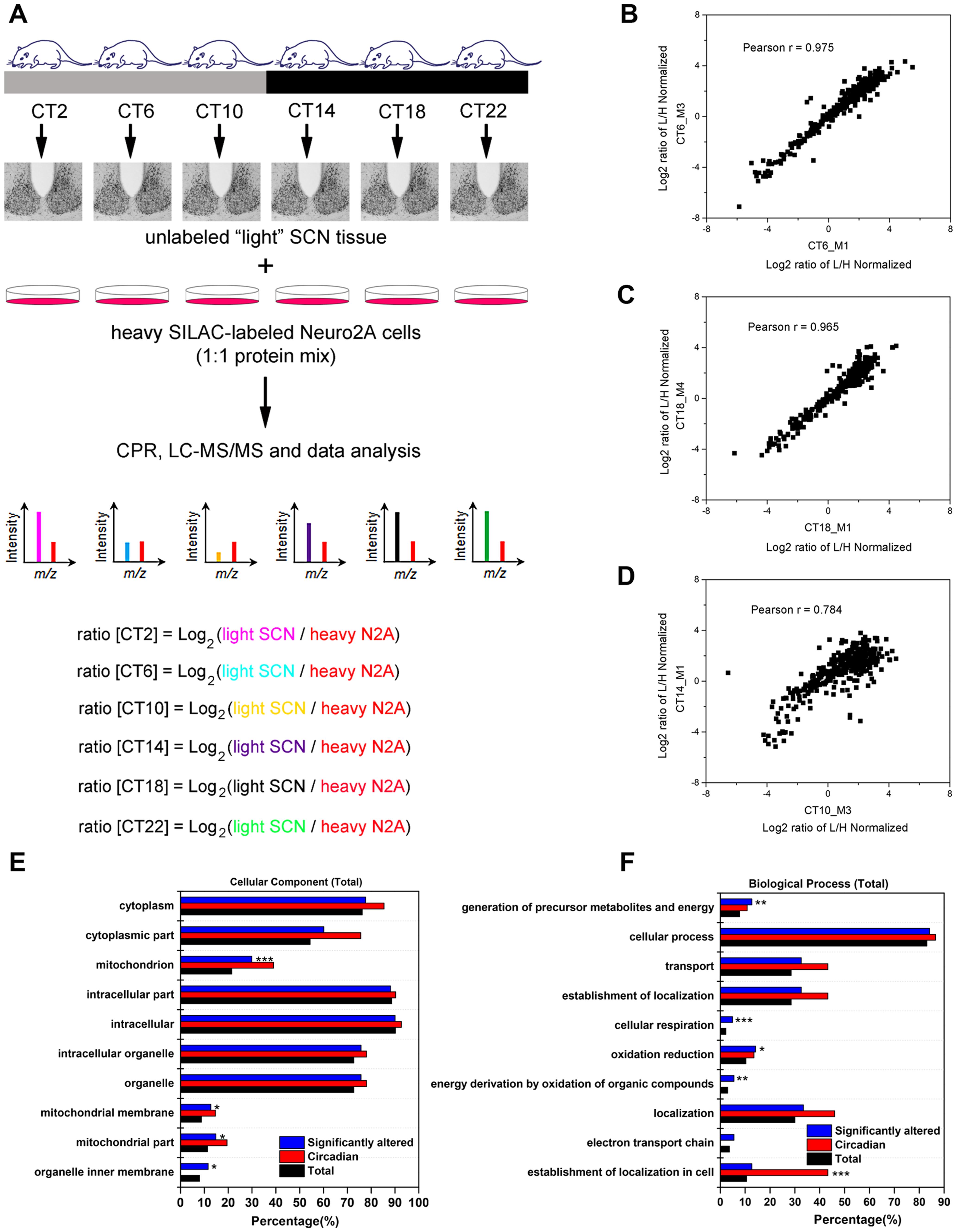 Global proteomic analysis of the murine SCN.