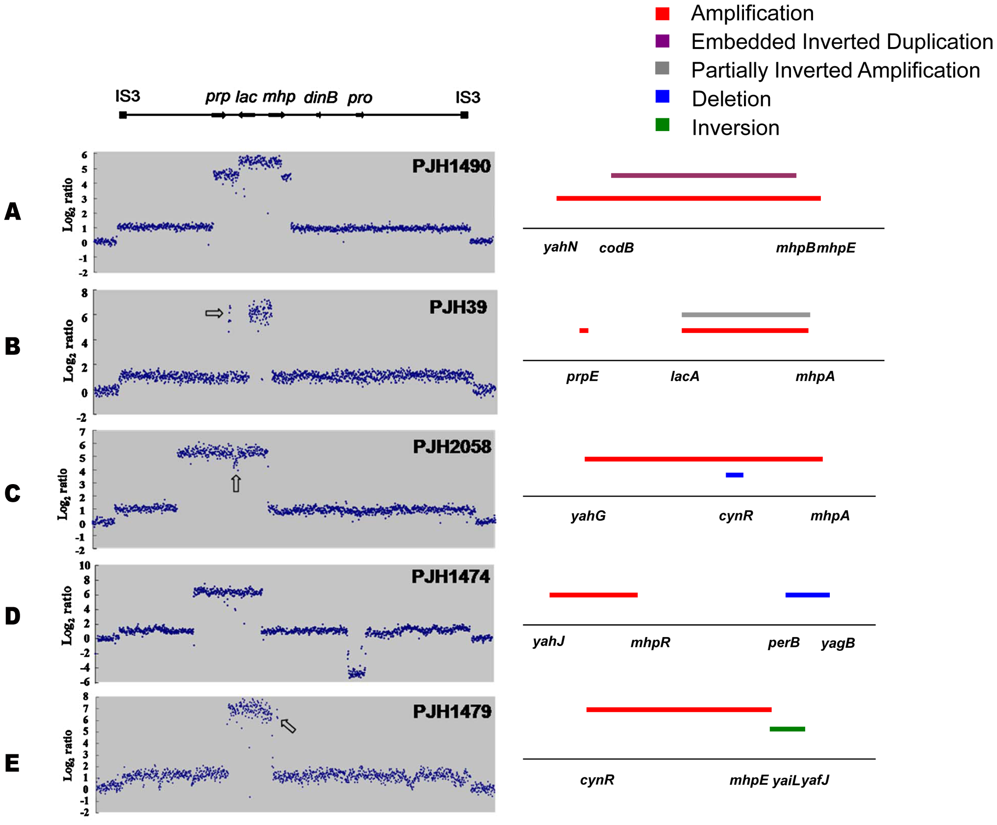 Complex rearrangements on the F′<sub>128</sub> revealed by oligonucleotide aCGH and confirmed by PCR and DNA sequencing.