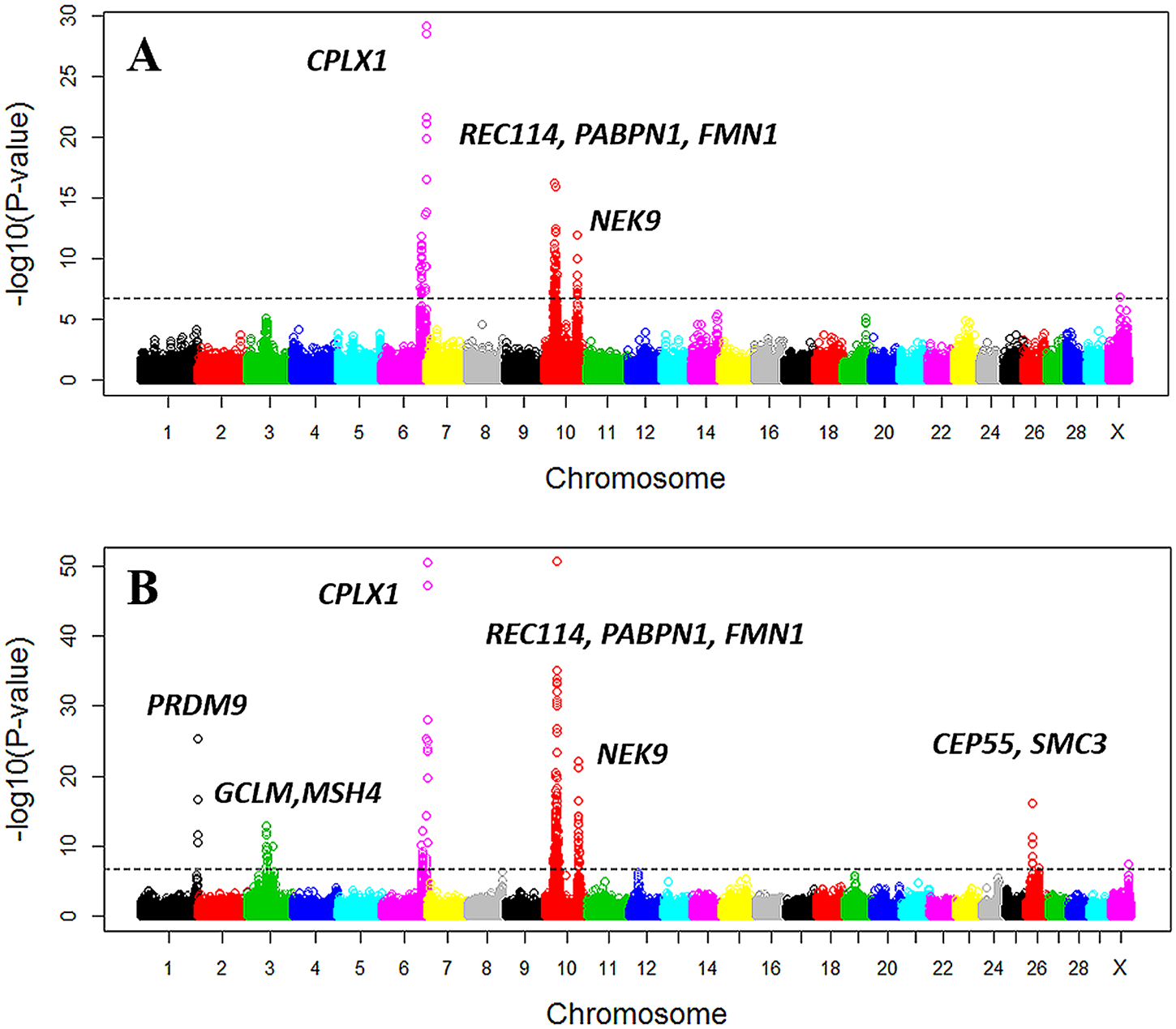 Manhattan plot of the GWAS of genome-wide recombination rates for males (A) and females (B).