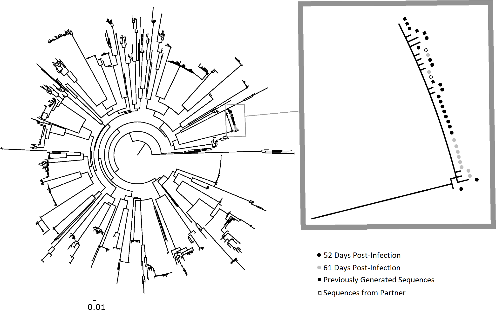 Phylogenetic analysis of HIV-1 <i>env</i> sequences from longitudinal specimens from PIC subject 90629.