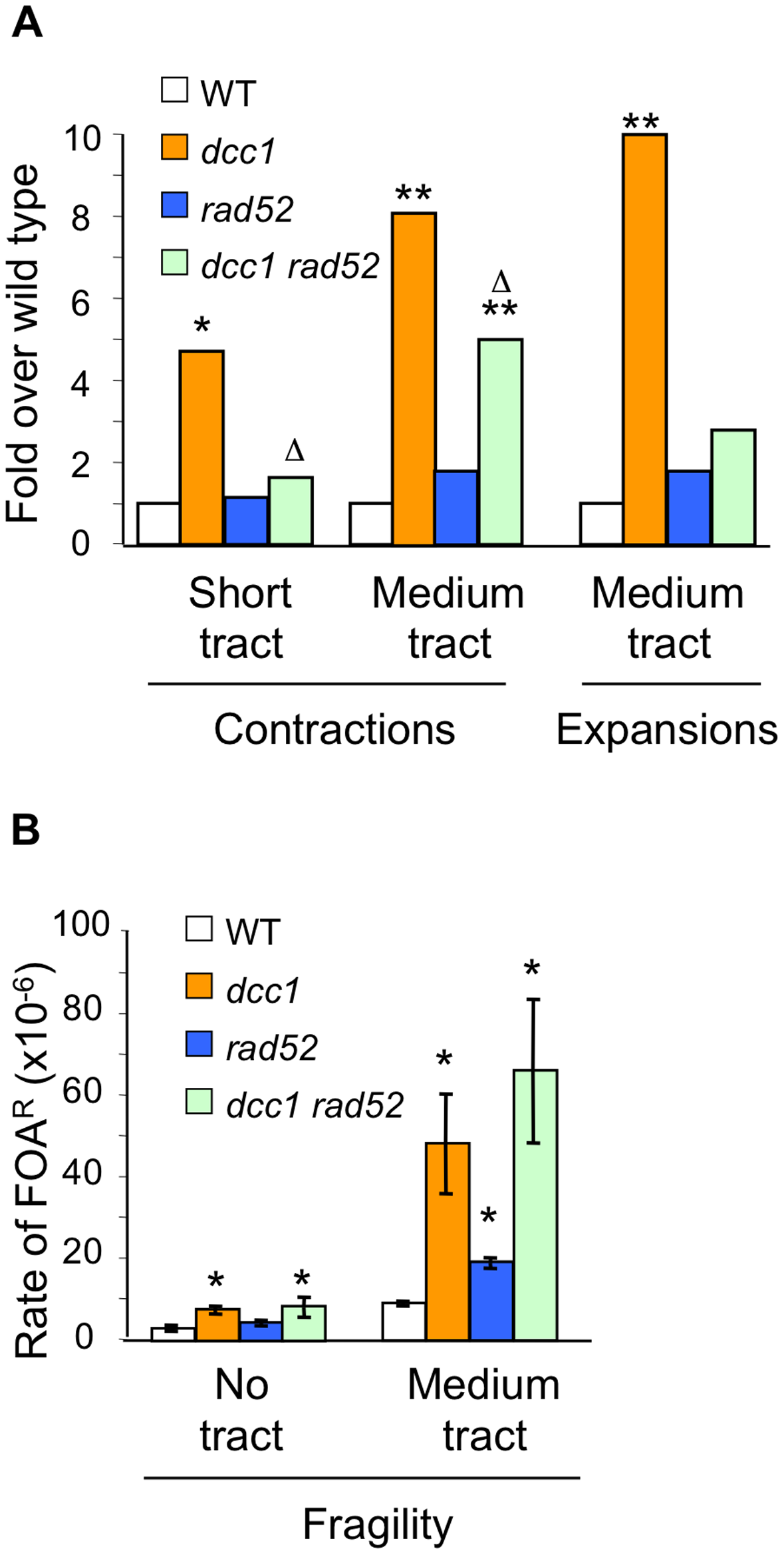 Analysis of <i>rad52</i> effects on triplet repeat instability phenotype of <i>dcc1</i>.
