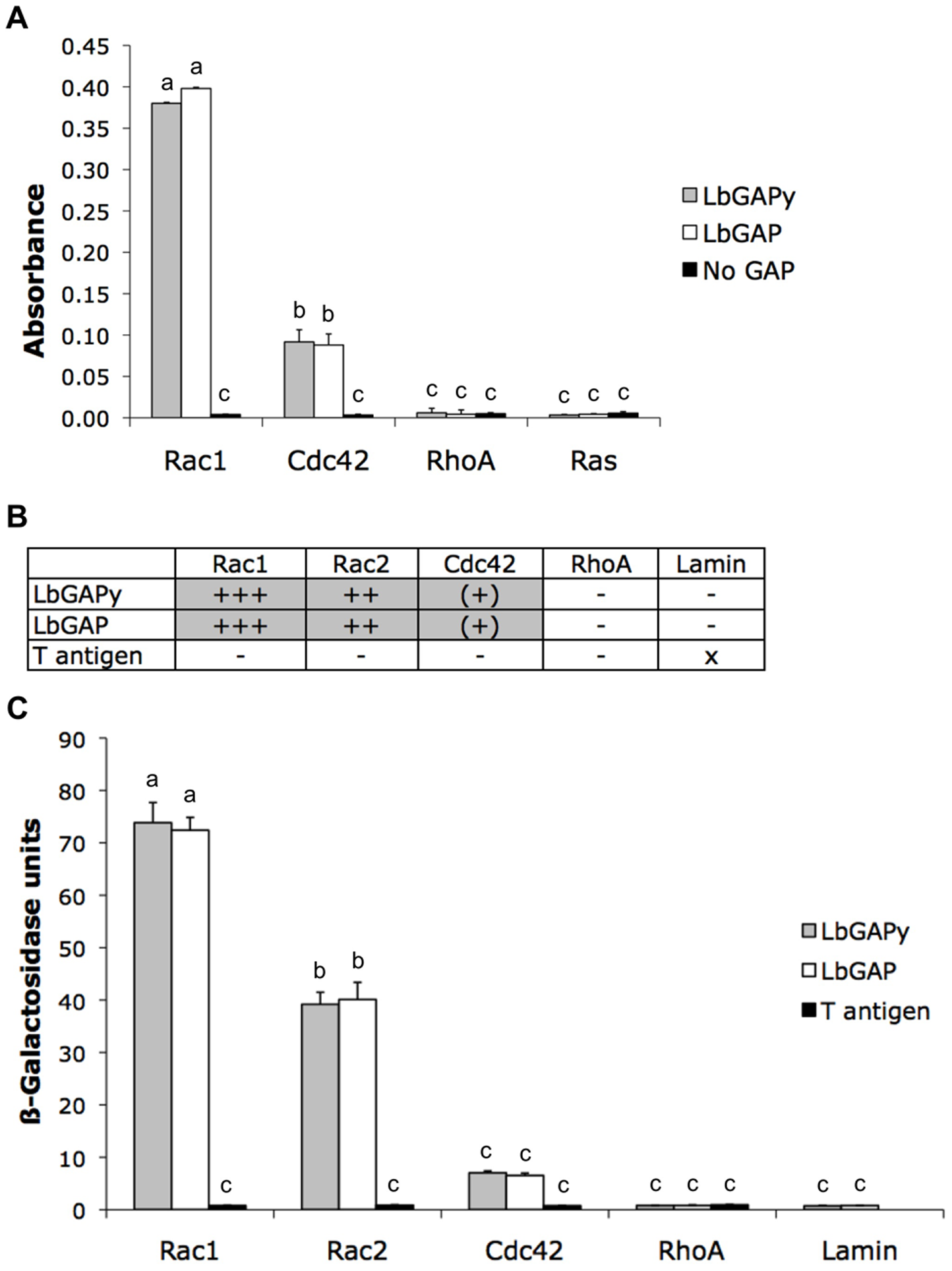 LbGAPy displays a GAP activity <i>in vitro</i> and interacts with <i>D. melanogaster</i> Rac1 and Rac2.