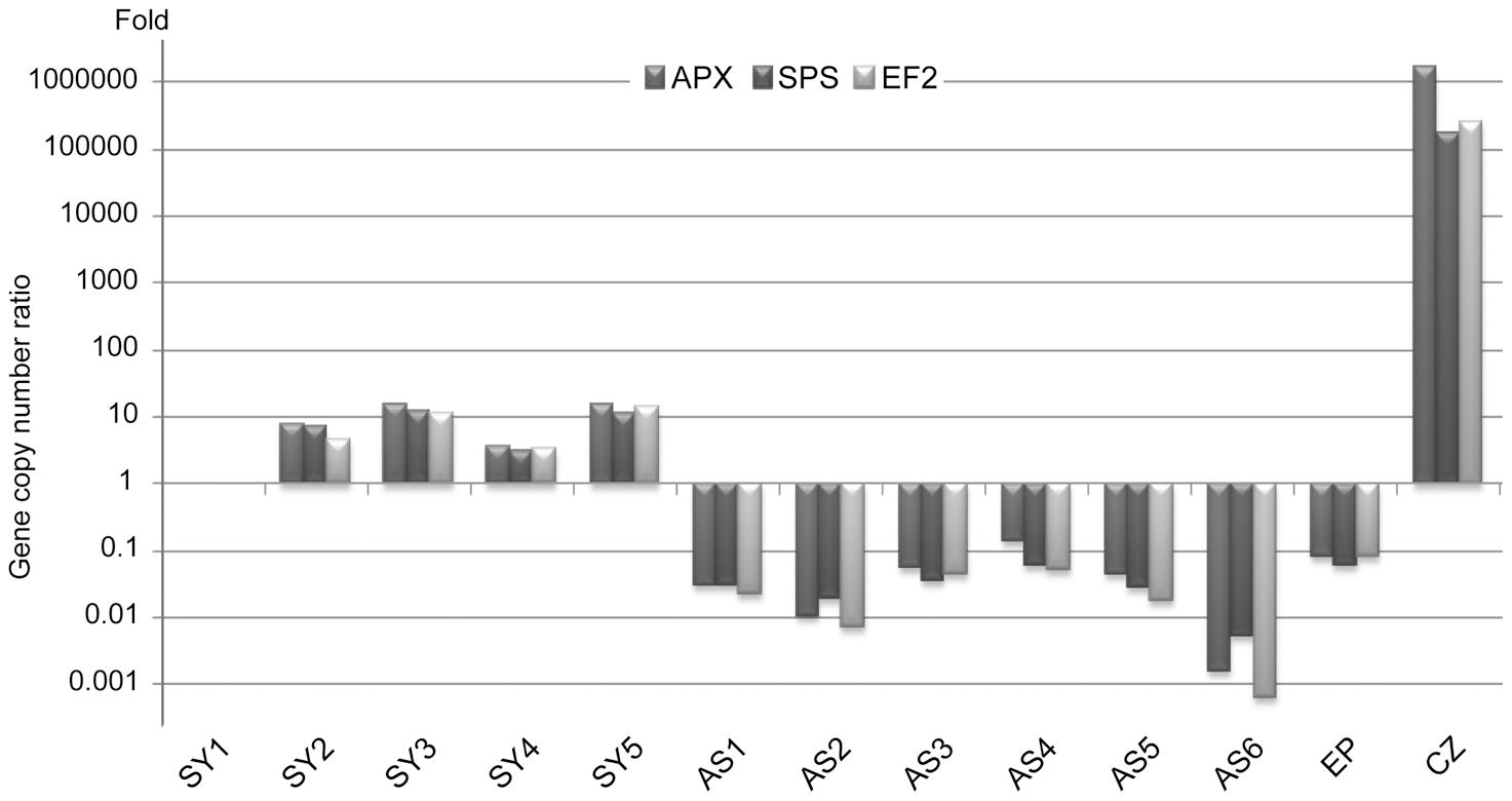 <i>Symbiodinium</i> quantification by real-time quantitative PCR (symbiont to host nuclei ratio).