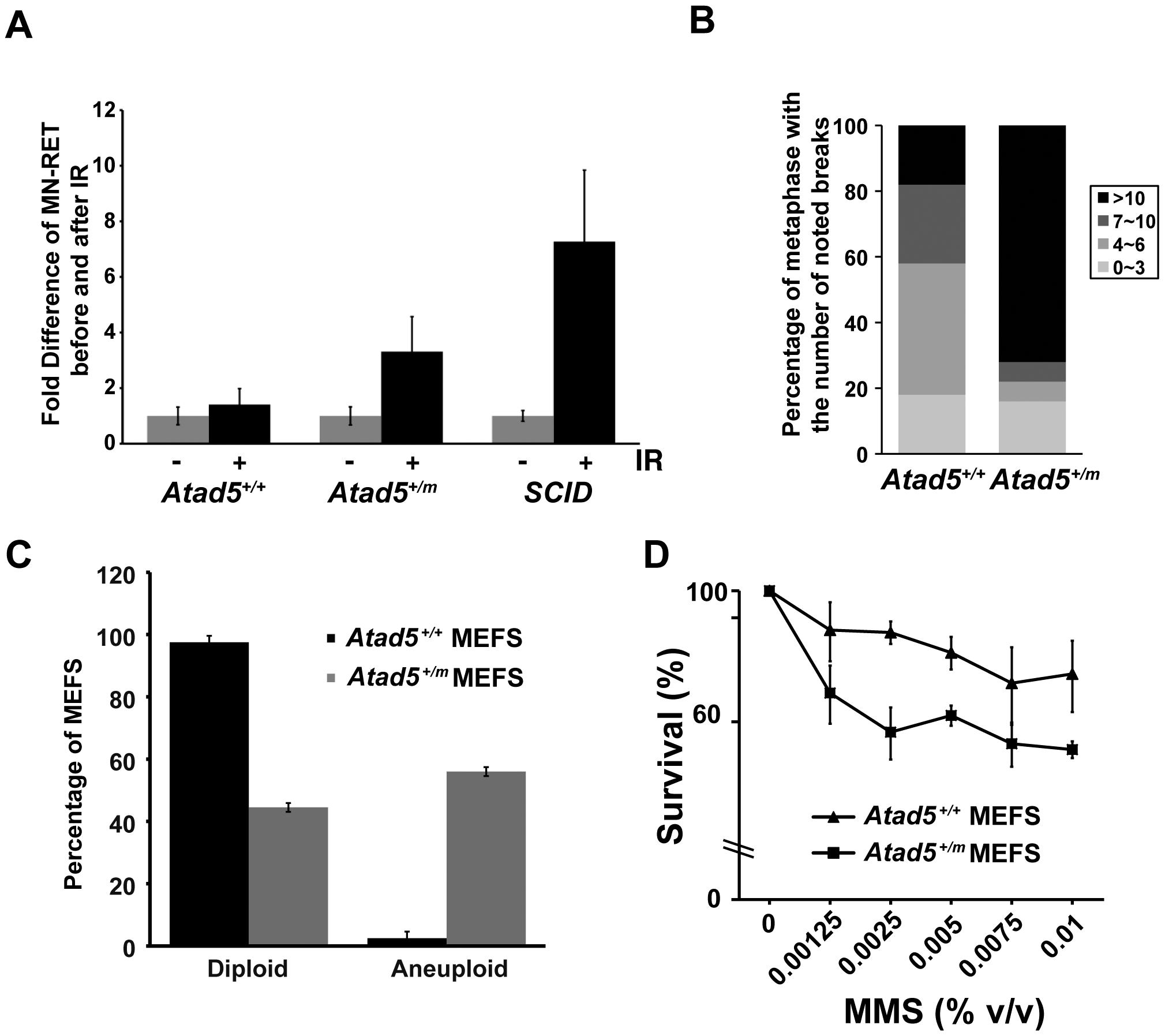 The heterozygous <i>Atad5<sup>+/m</sup></i> mutation causes genomic instability <i>in vivo</i> and in MEFs.