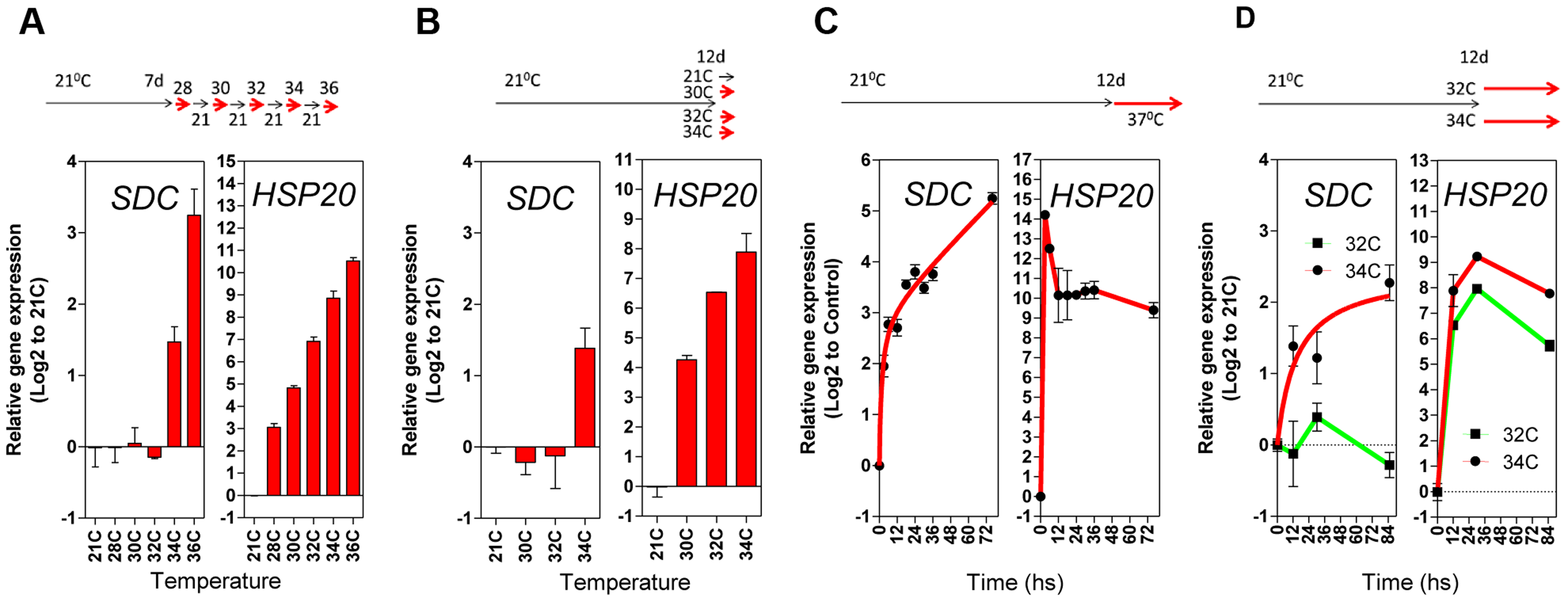 Transcriptional patterns of <i>SDC</i> expression under heat compared to a typical heat-shock gene.