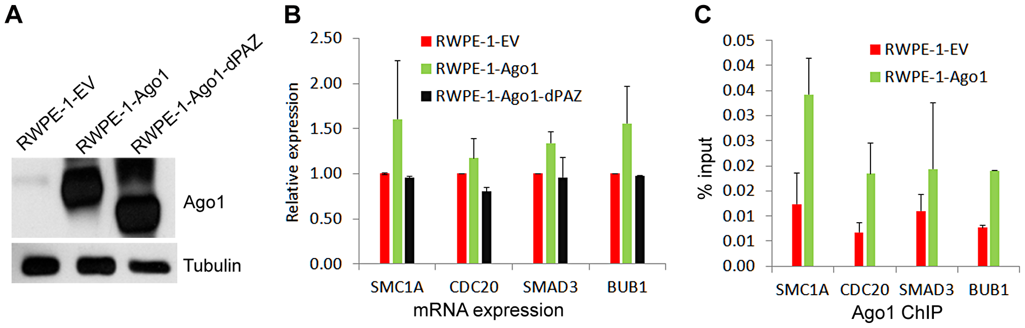 Overexpression of Ago1 leads to increase Ago1 binding of promoters and increased expression of their associated genes.