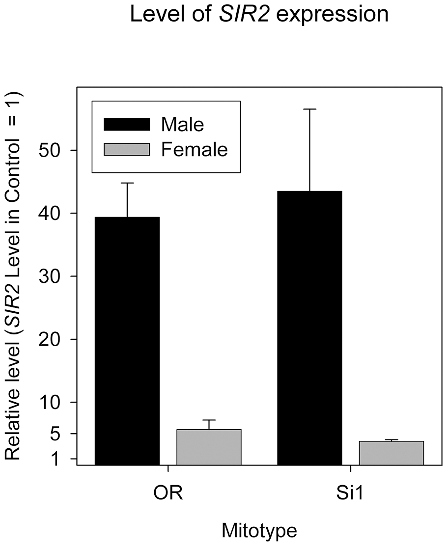 <i>SIR2</i> overexpression level in both sexes of mitotype si1 and OreR.