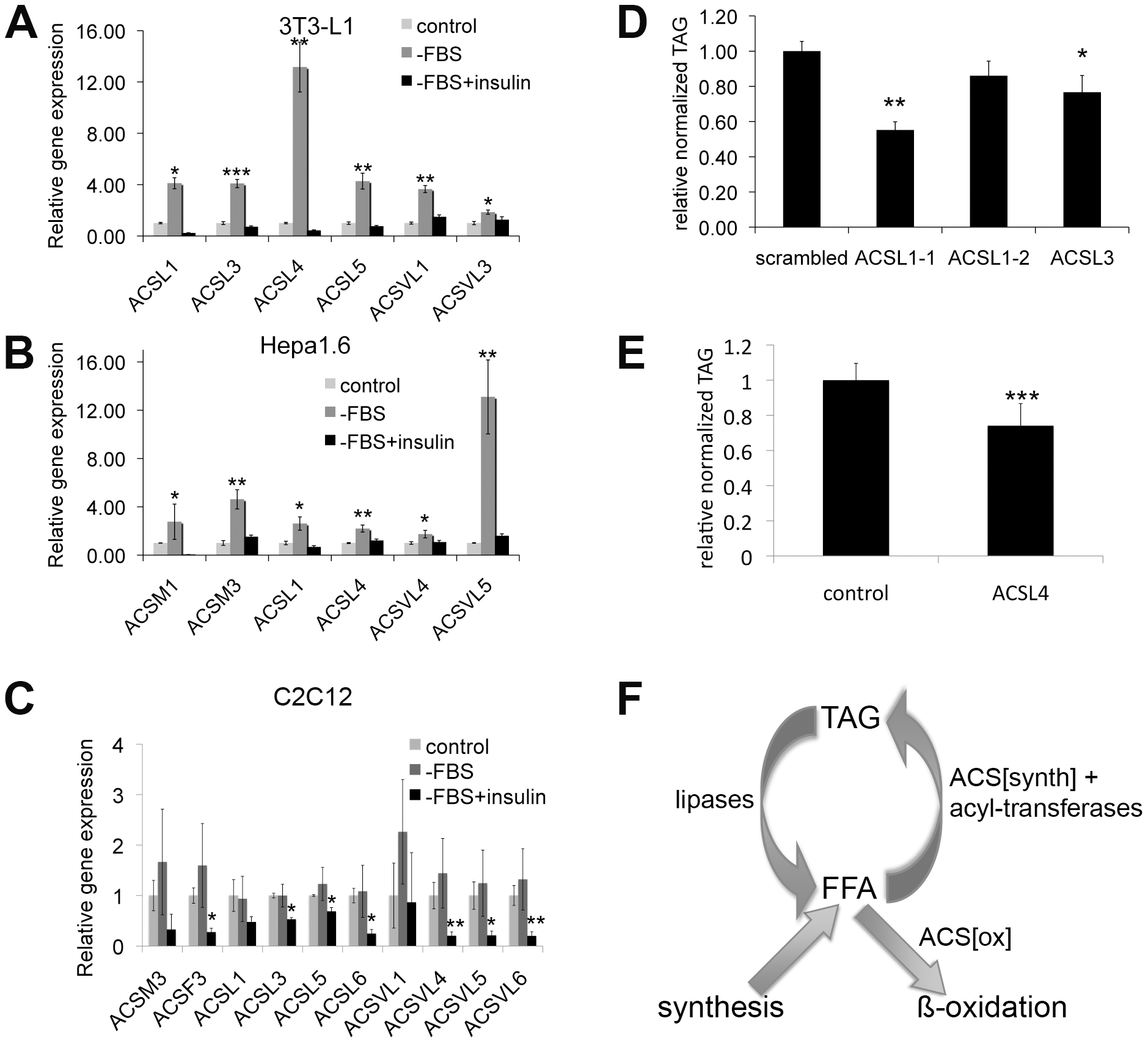 Expression of many ACSs is regulated by insulin in mammals, and their expression level affects lipid homeostasis.