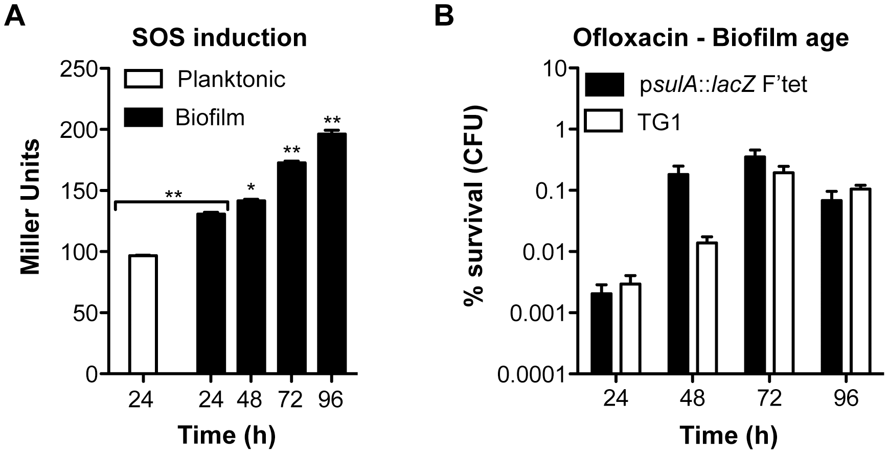 Induction of the SOS response and ofloxacin tolerance in aging biofilms.