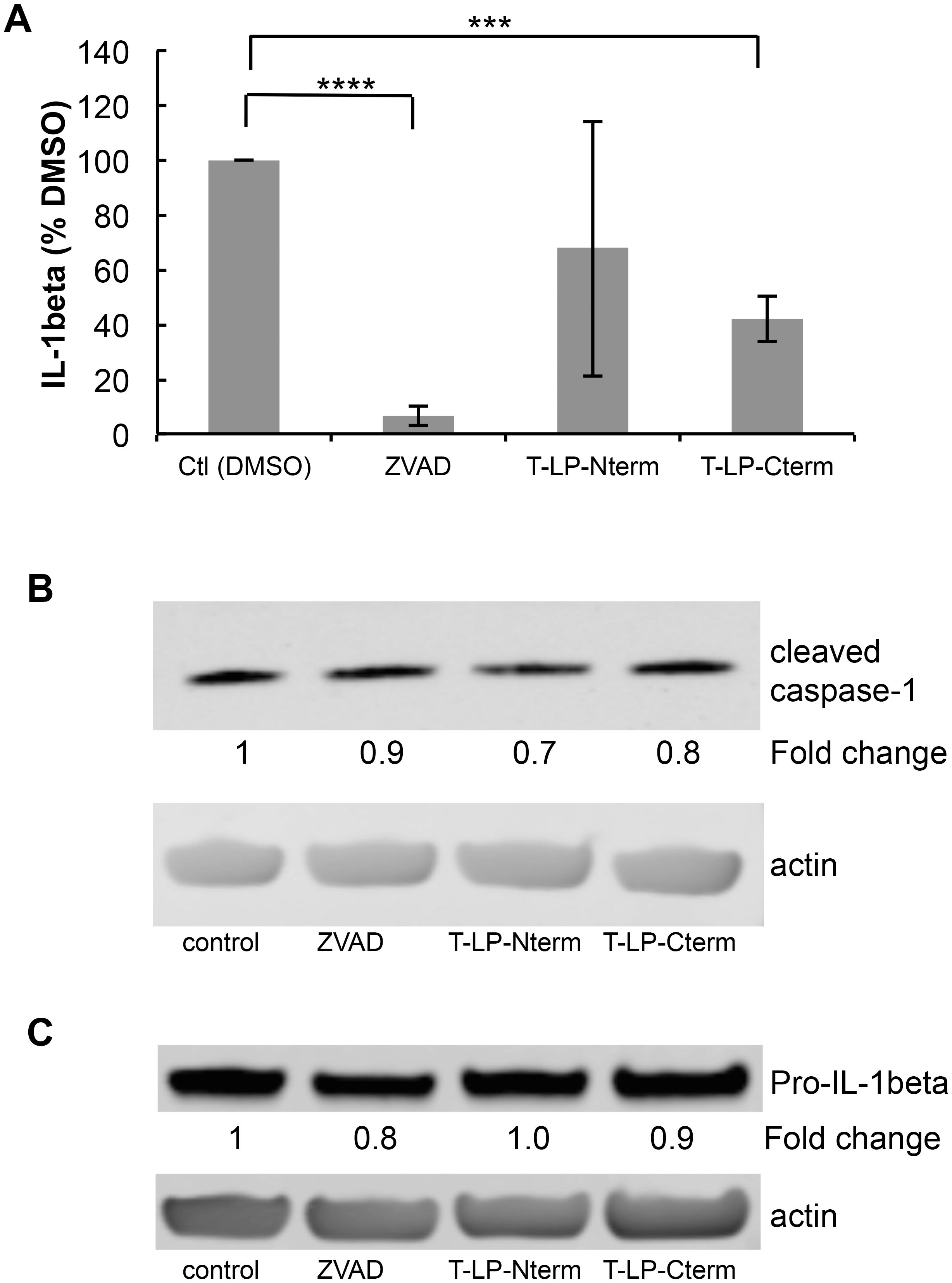 Peptides containing LANA caspase cleavage sites inhibit IL-1β production.