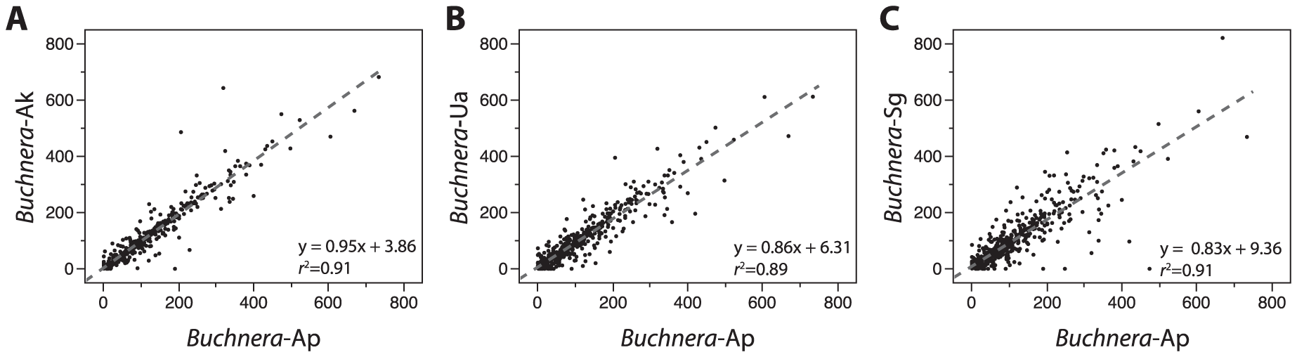 Conservation of IGS lengths among <i>Buchnera</i> from Aphidinae hosts.