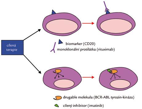 Mechanizmus účinku cílených léčiv.