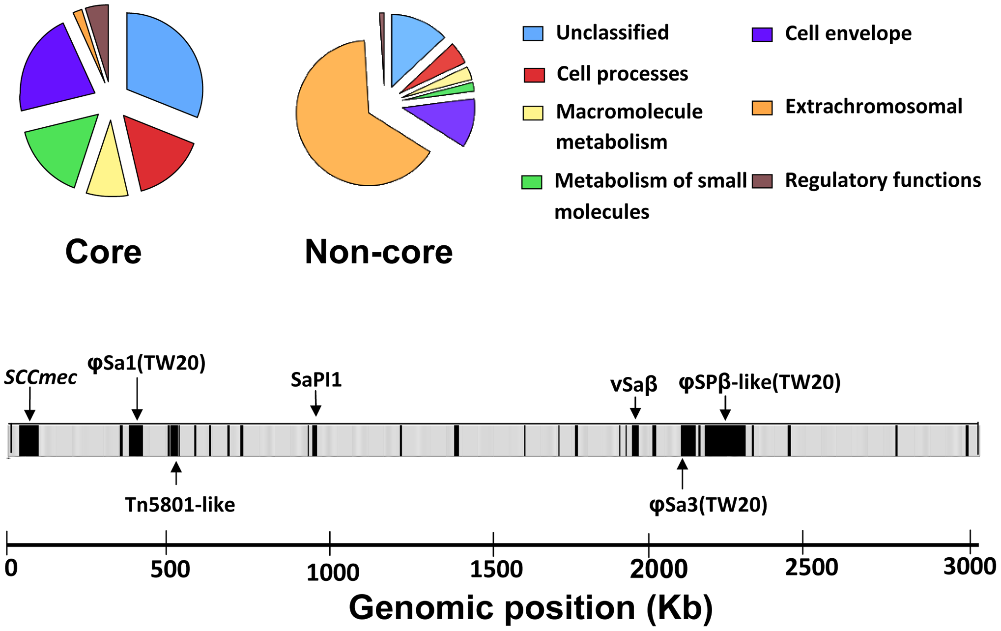 Functional classification of genes assigned to core and non-core regions based on an adapted version of Riley's classification.