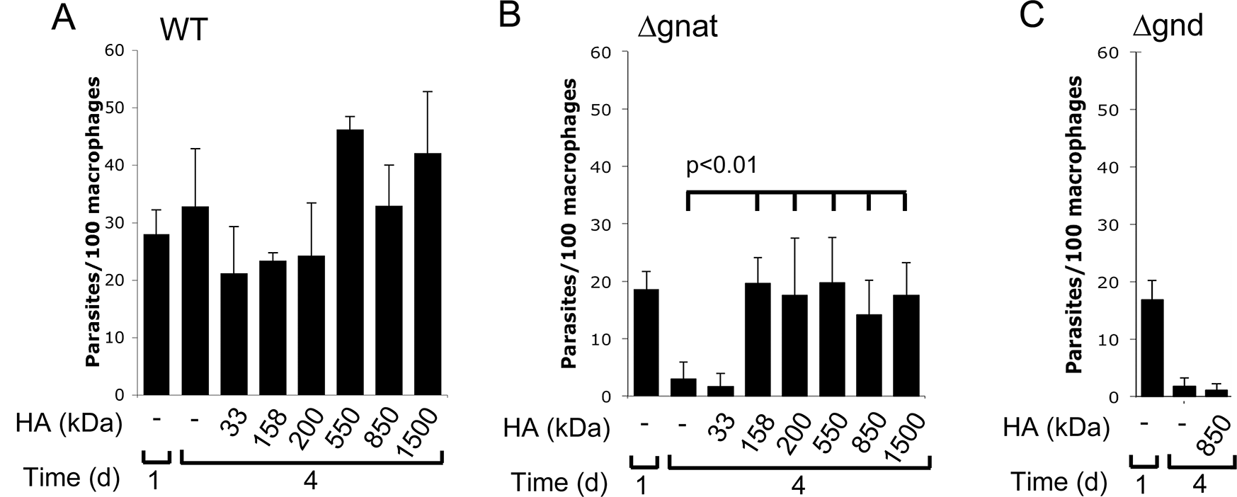 High molecular weight hyaluronan rescue intracellular ∆<i>gnat</i> parasites.